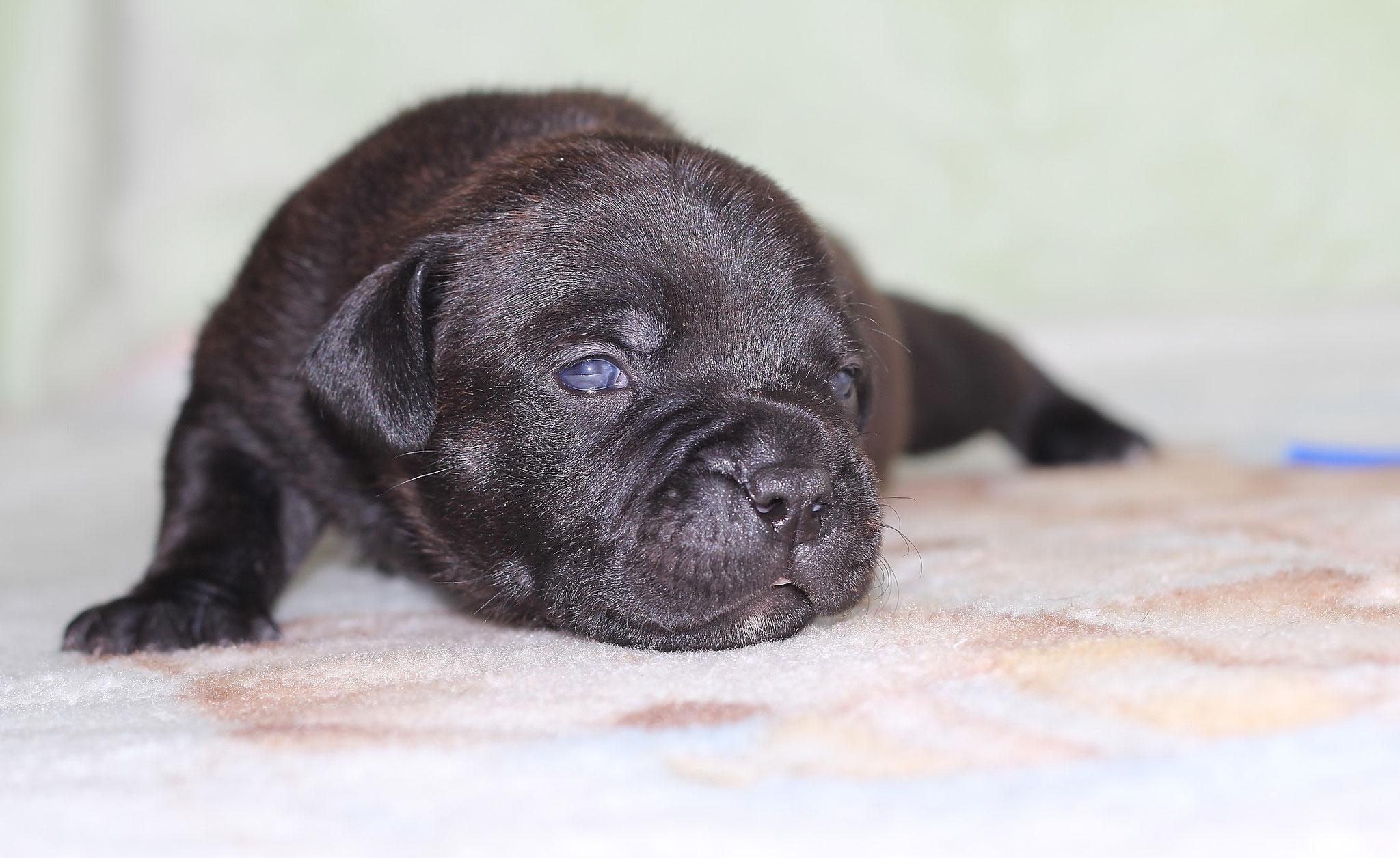 blue boy 14 days old