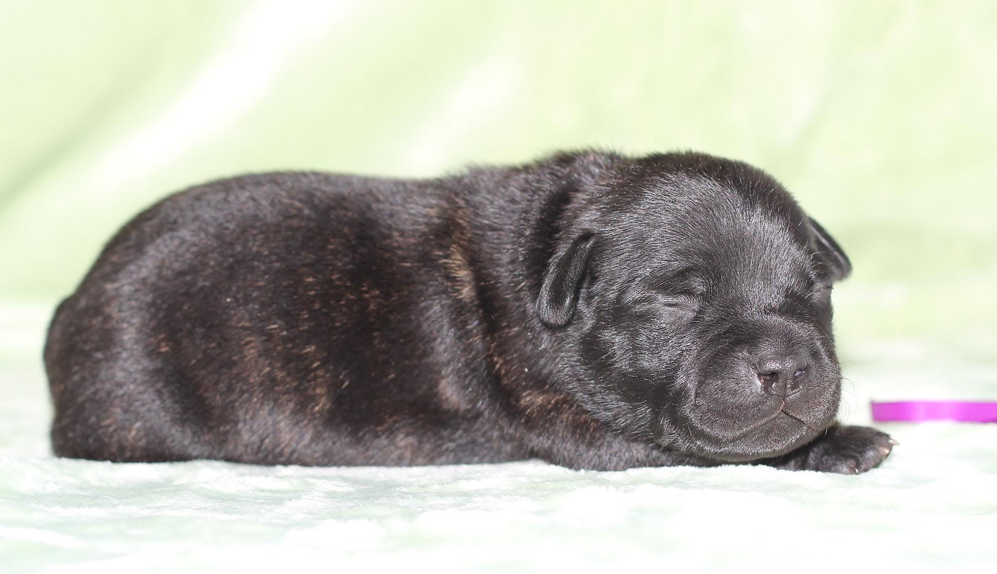 purple boy 9 days old