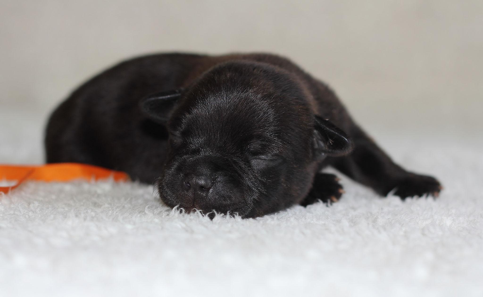 orange boy 6 days old