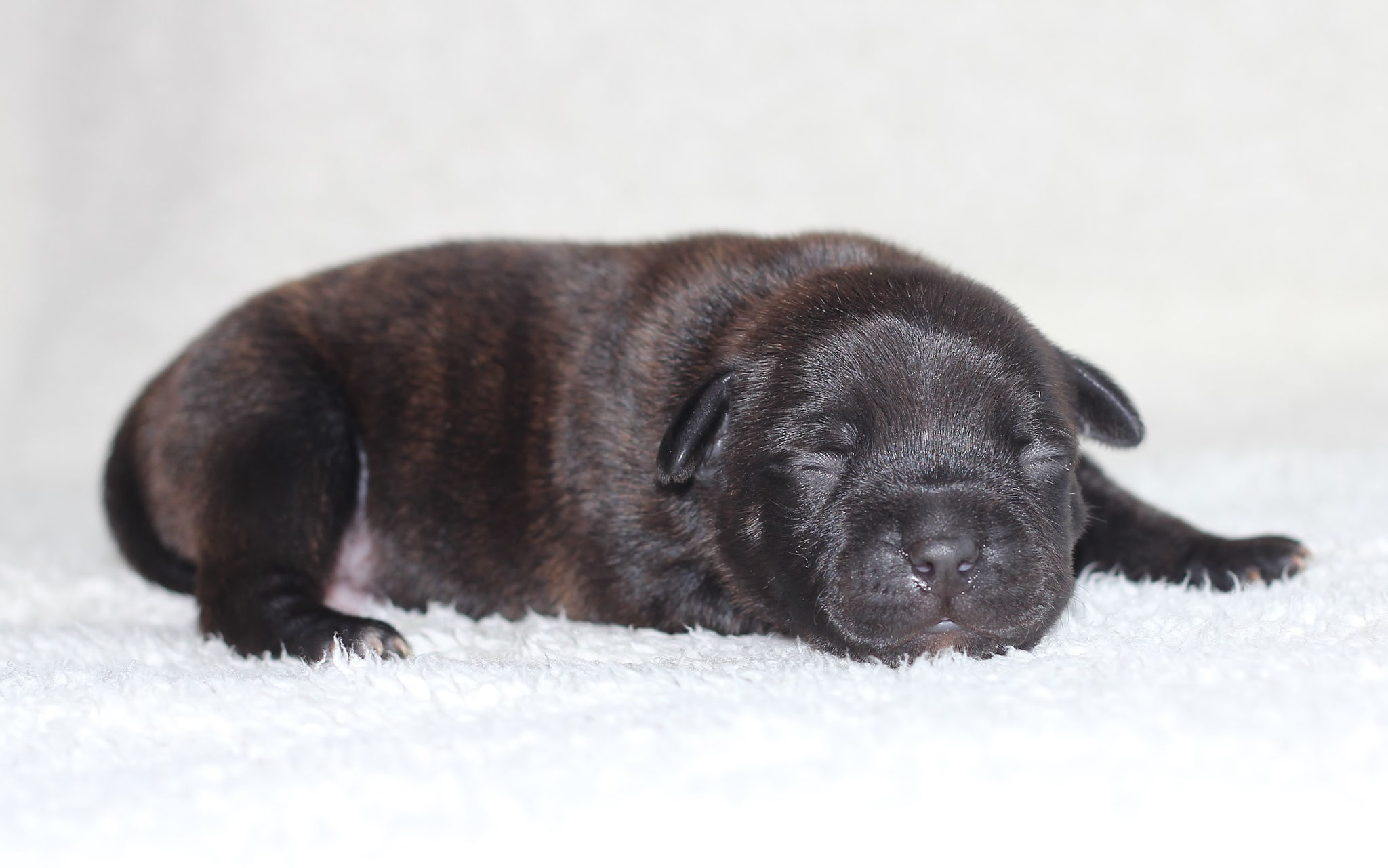 blue boy 6 days old