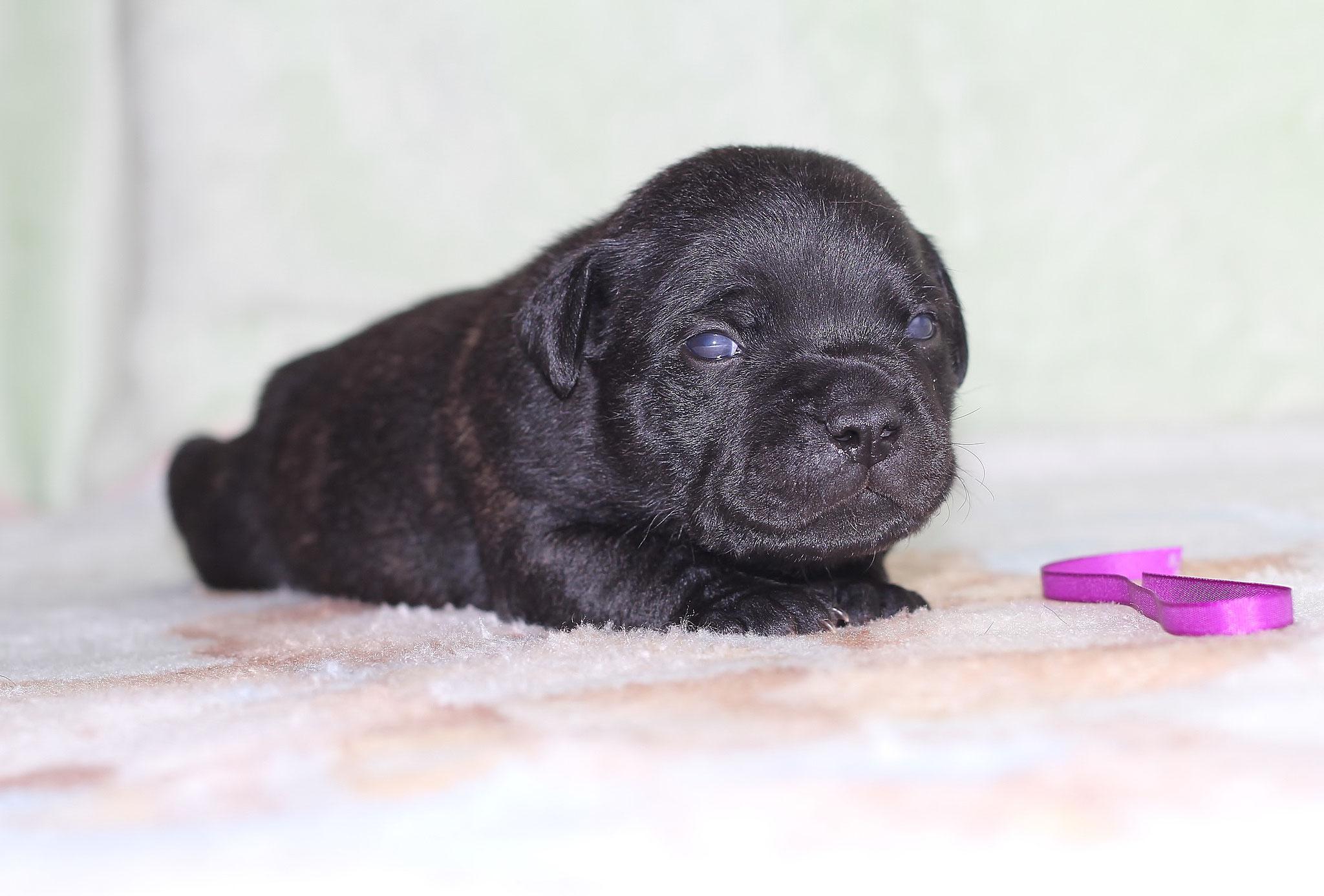 purple boy 14 days old