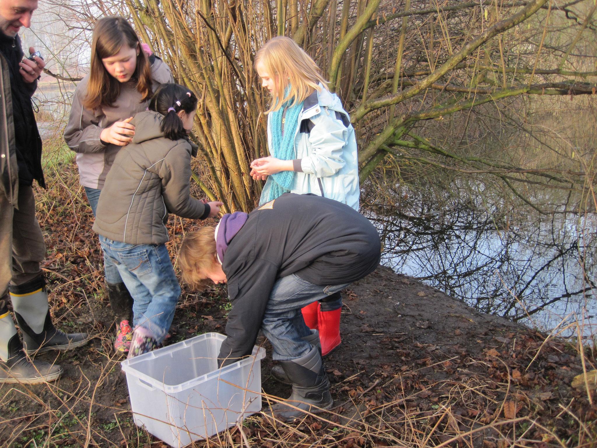 Am Laichgewässer werden die Tiere wieder ausgesetzt.