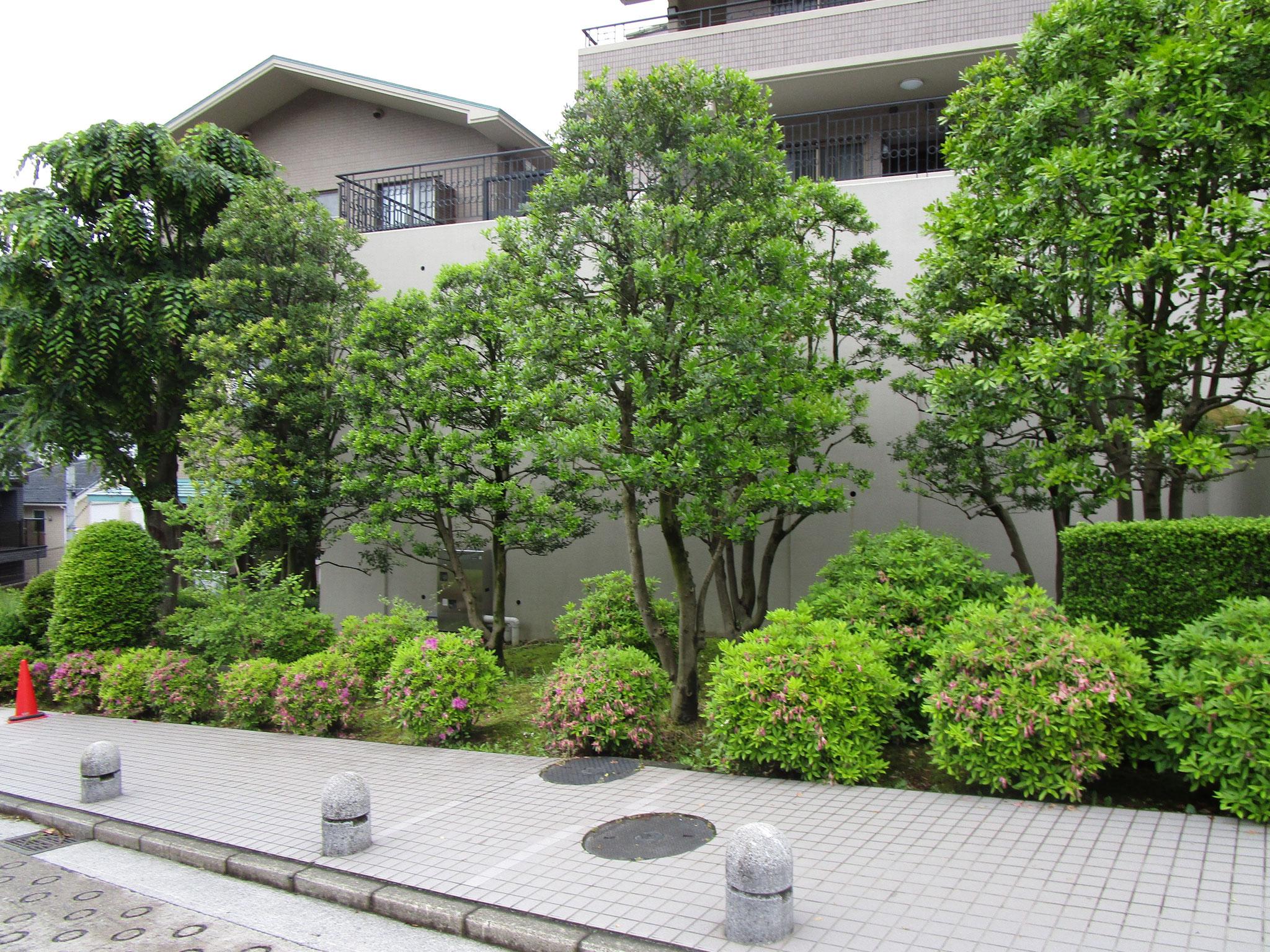 敷地内には植栽が豊富です