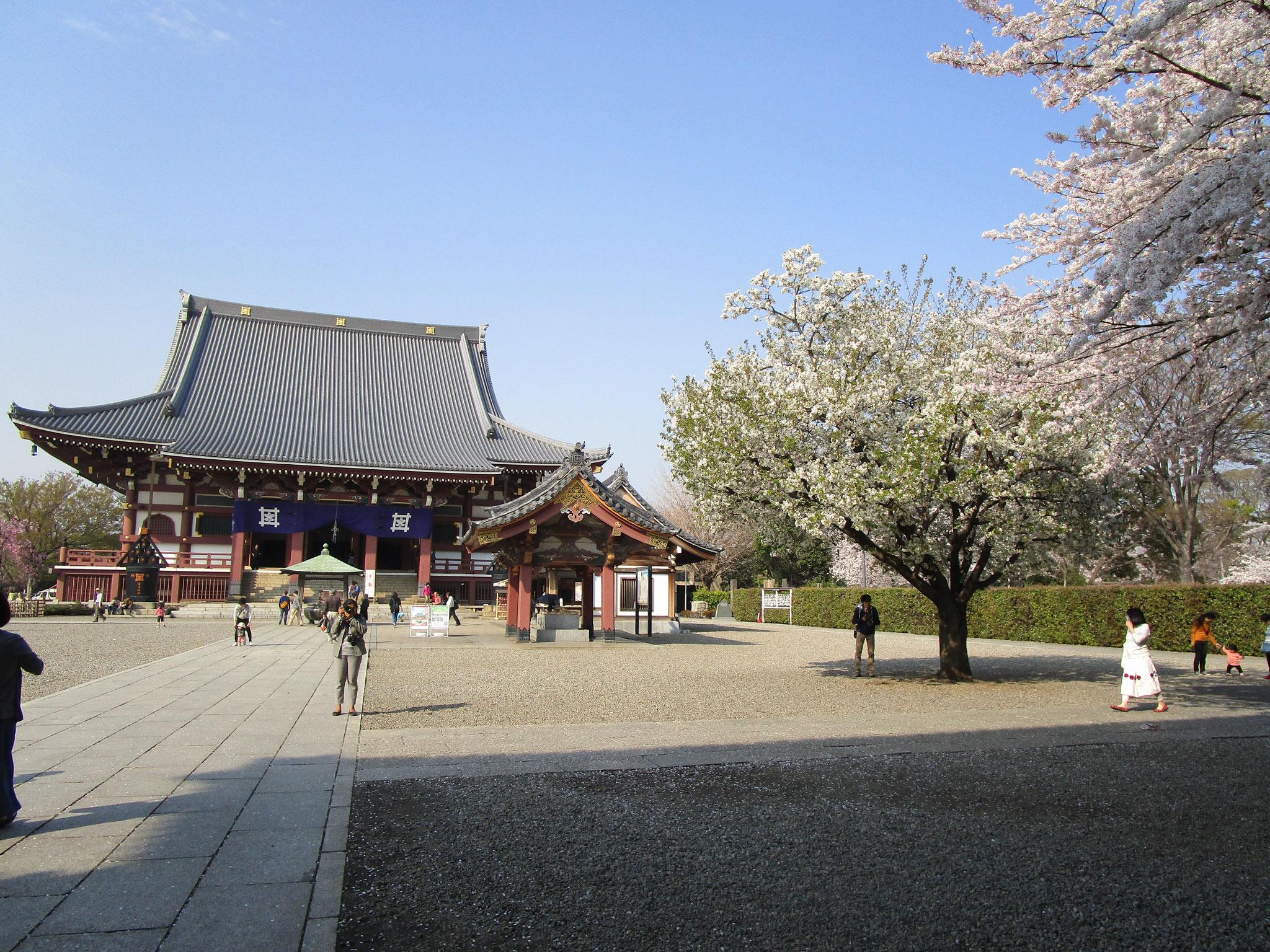 石段を上がり、仁王門を通った先の右側は桜広場です