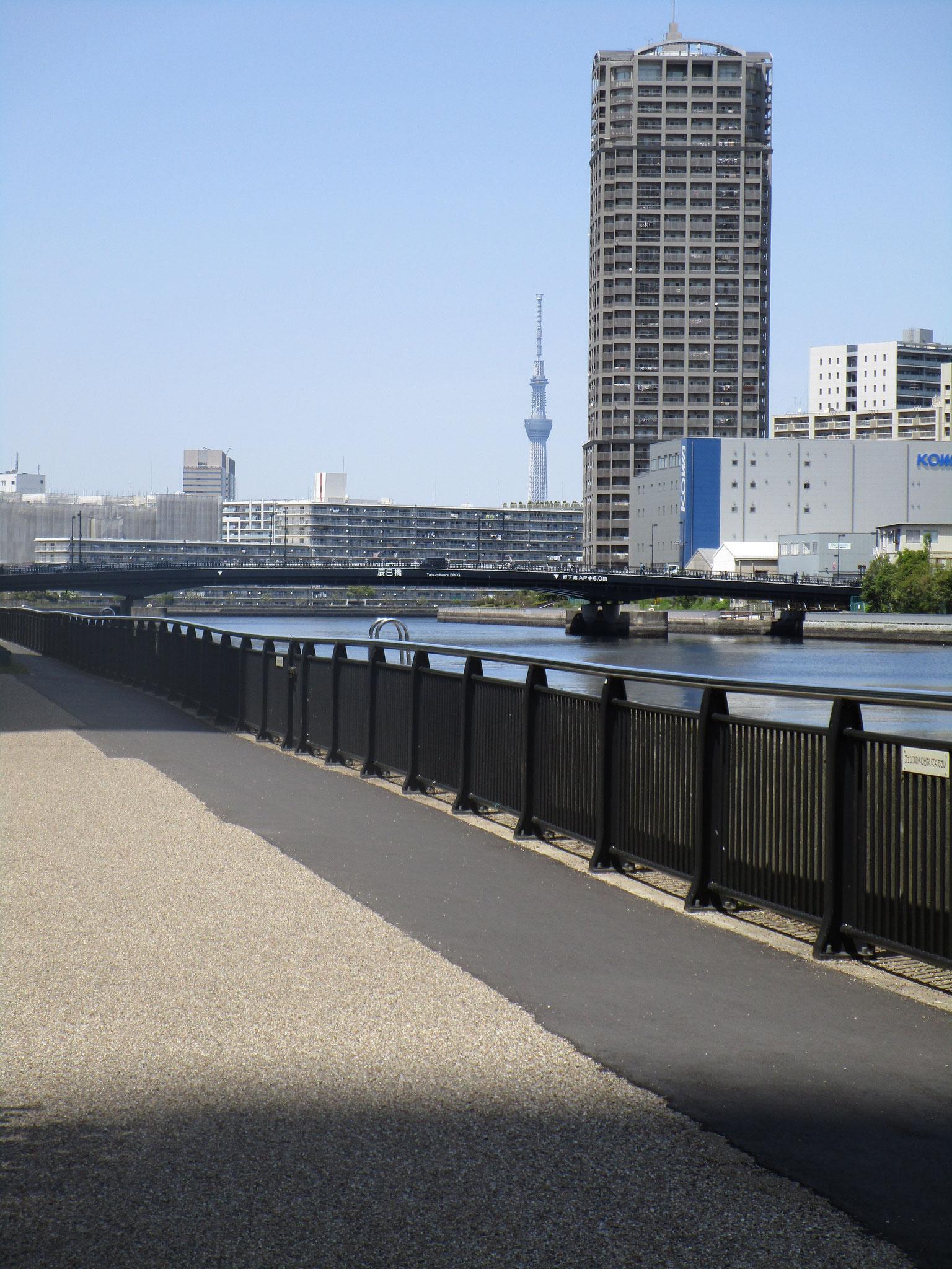 渡った先の運河沿いの道からはスカイツリーが見えます