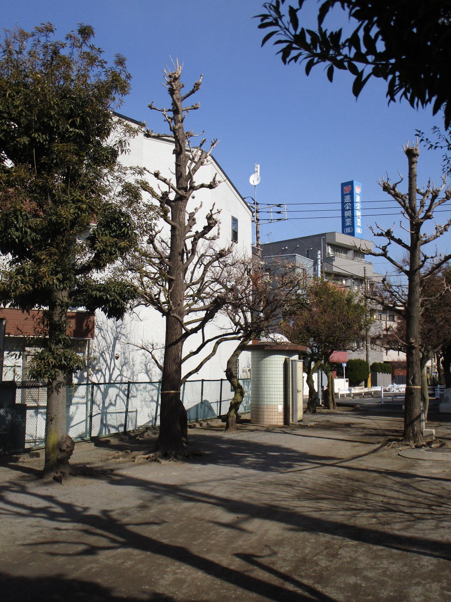 「Amitie Kamata」の南側は旧呑川緑地