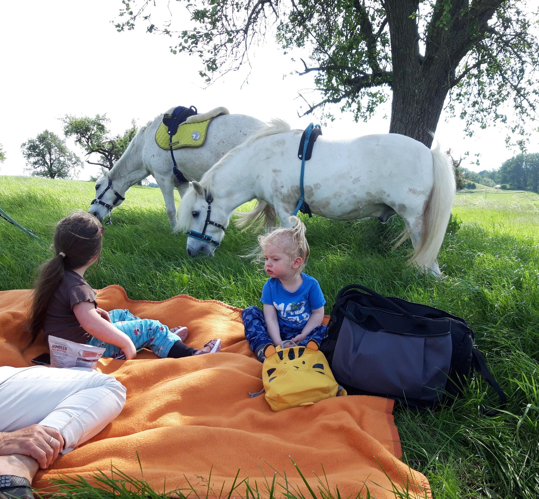 Ausritt mit Picknick