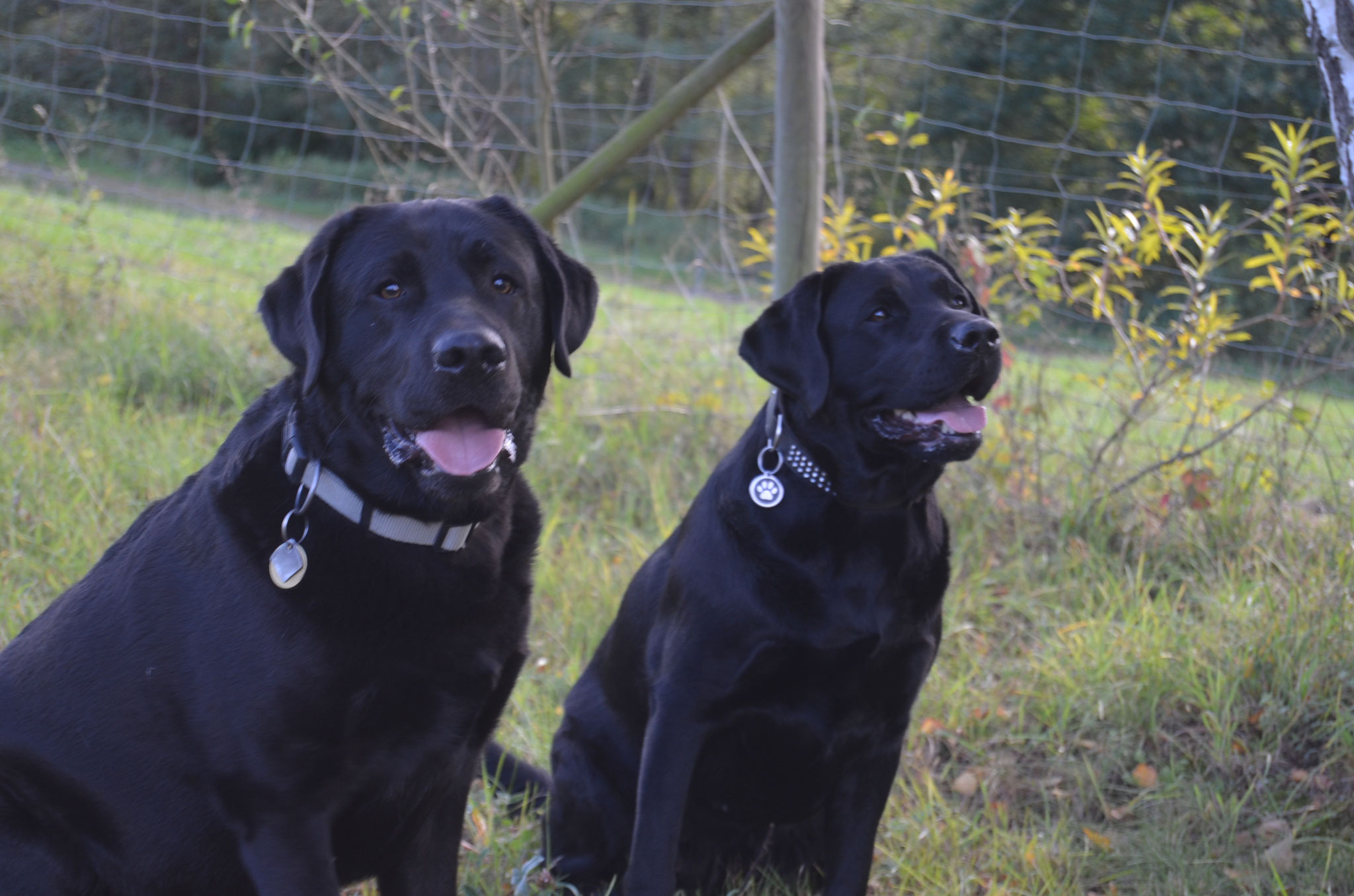 Knut und Maggie