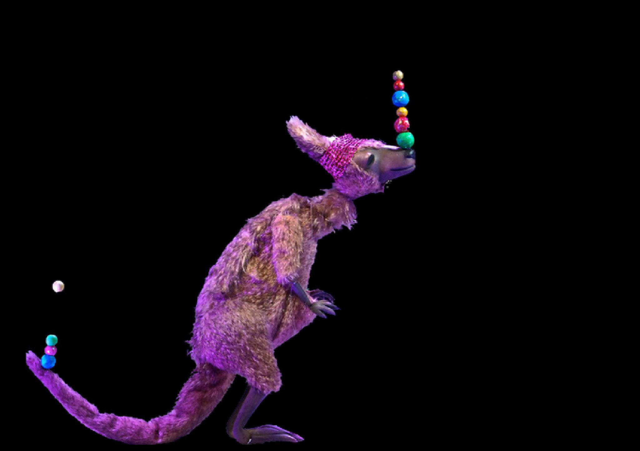 ...das Känguruh Kokolura jonlieren artistisch.