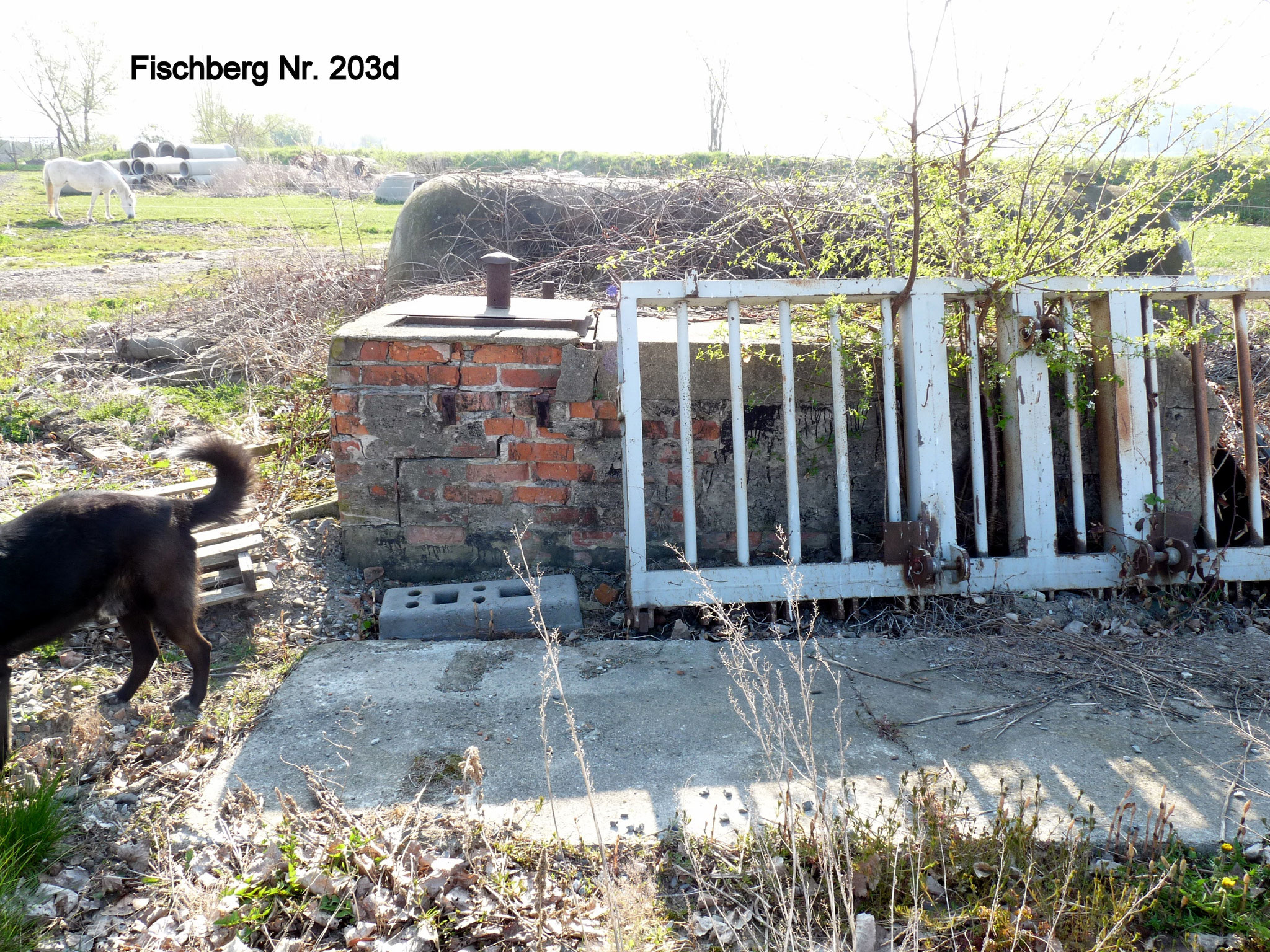 Fischberg 203