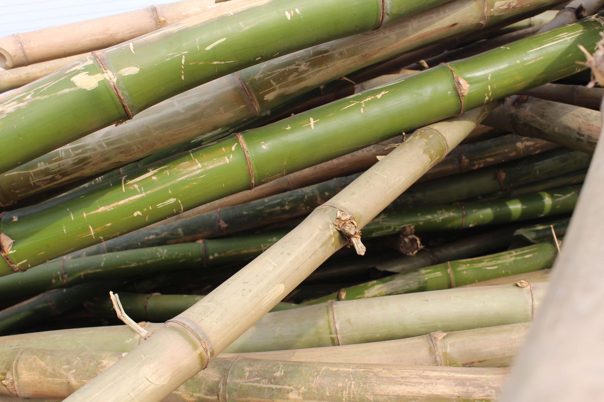 Bambus ist einer der nachhaltigsten und am schnellsten nachwachsenden Rohstoffe der Welt