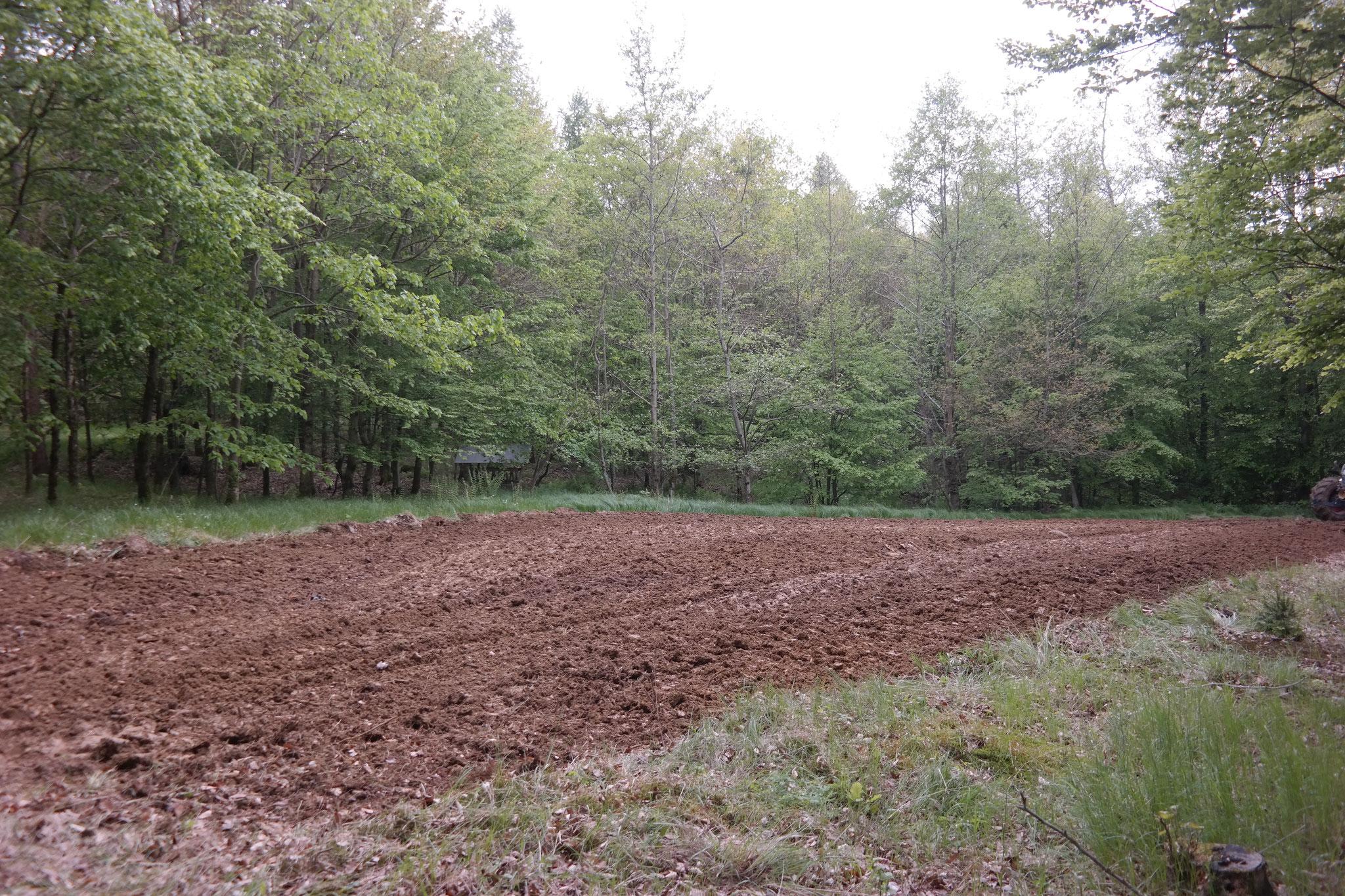 Der fertig bearbeitete Wildacker mit Rohboden.