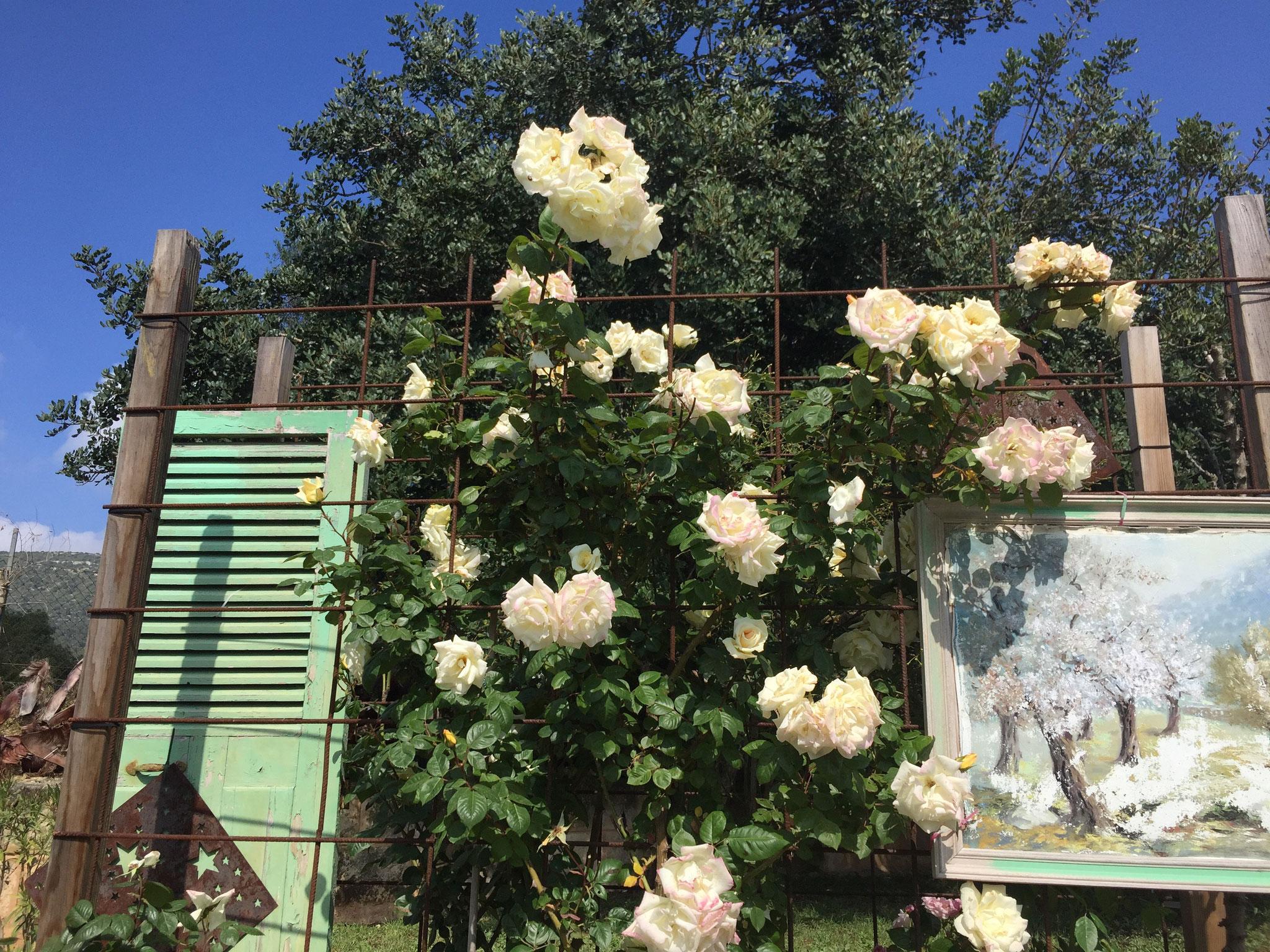 Rosenzauber im Mai