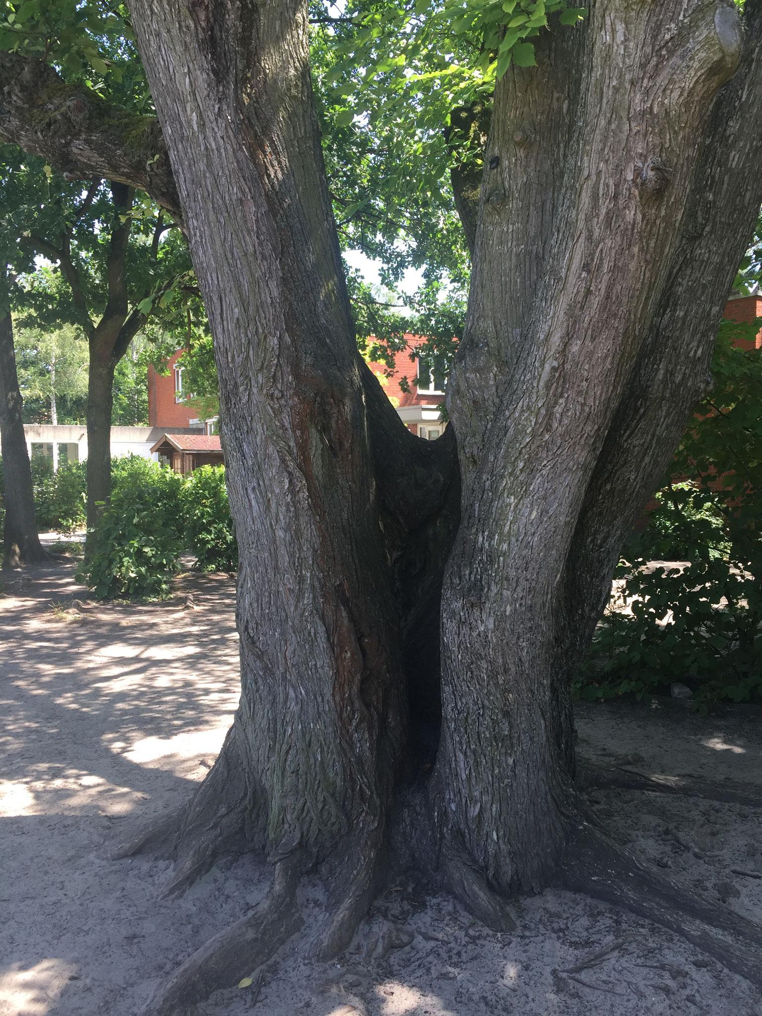Lieblingsplatz unserer Eichhörnchen.