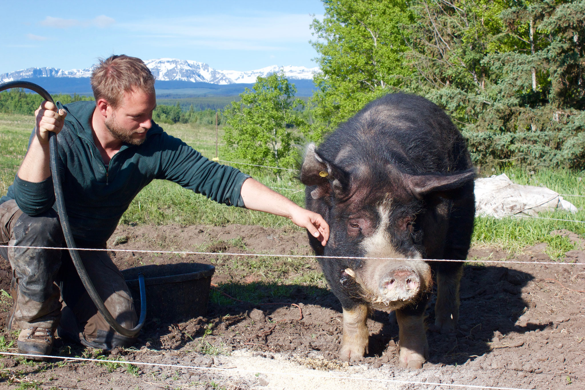 Tobi and Obi - the most gentle pig on earth (expect our wild boar Odin ;))