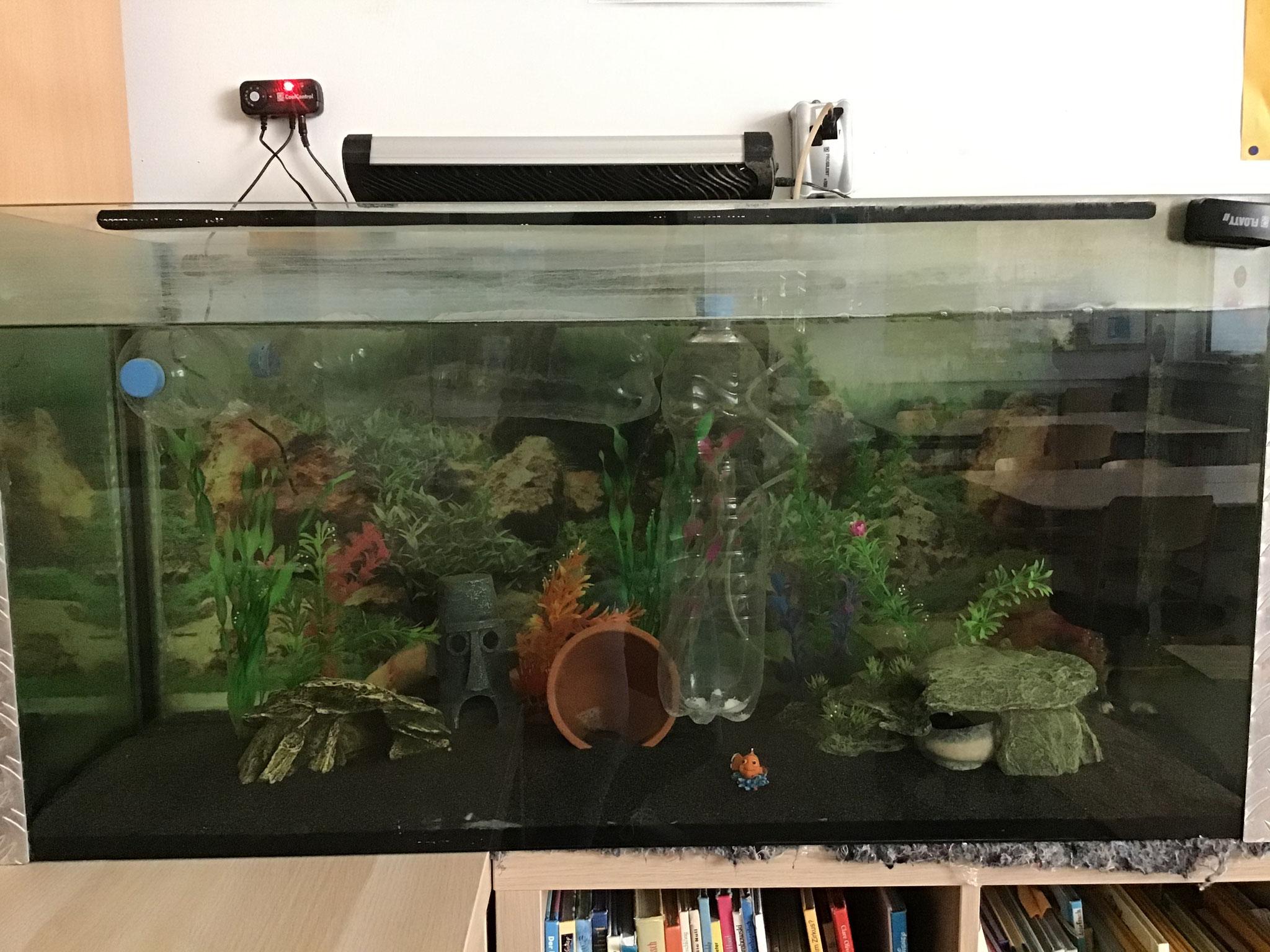 Unsere Axolotl