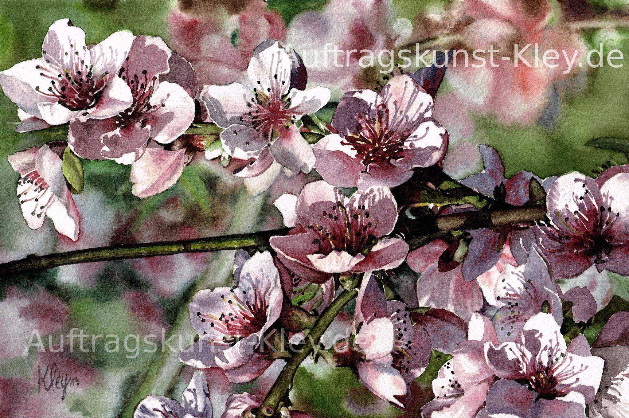 """Kirschblüten"" Aquarell ca. 20x30cm"