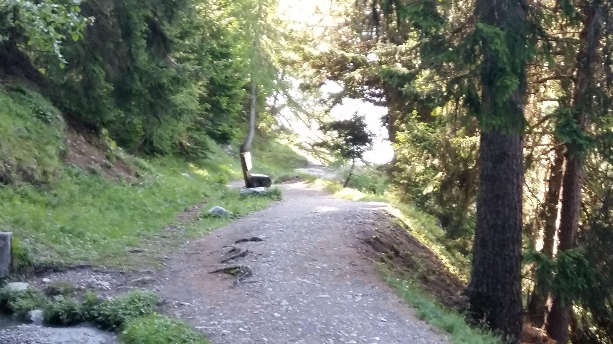 Früh am Morgen sind wir noch alleine auf den Wanderwegen.