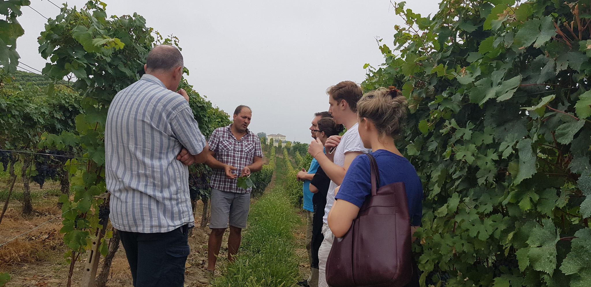 Besuch unserer Gäste beim Weinbauern