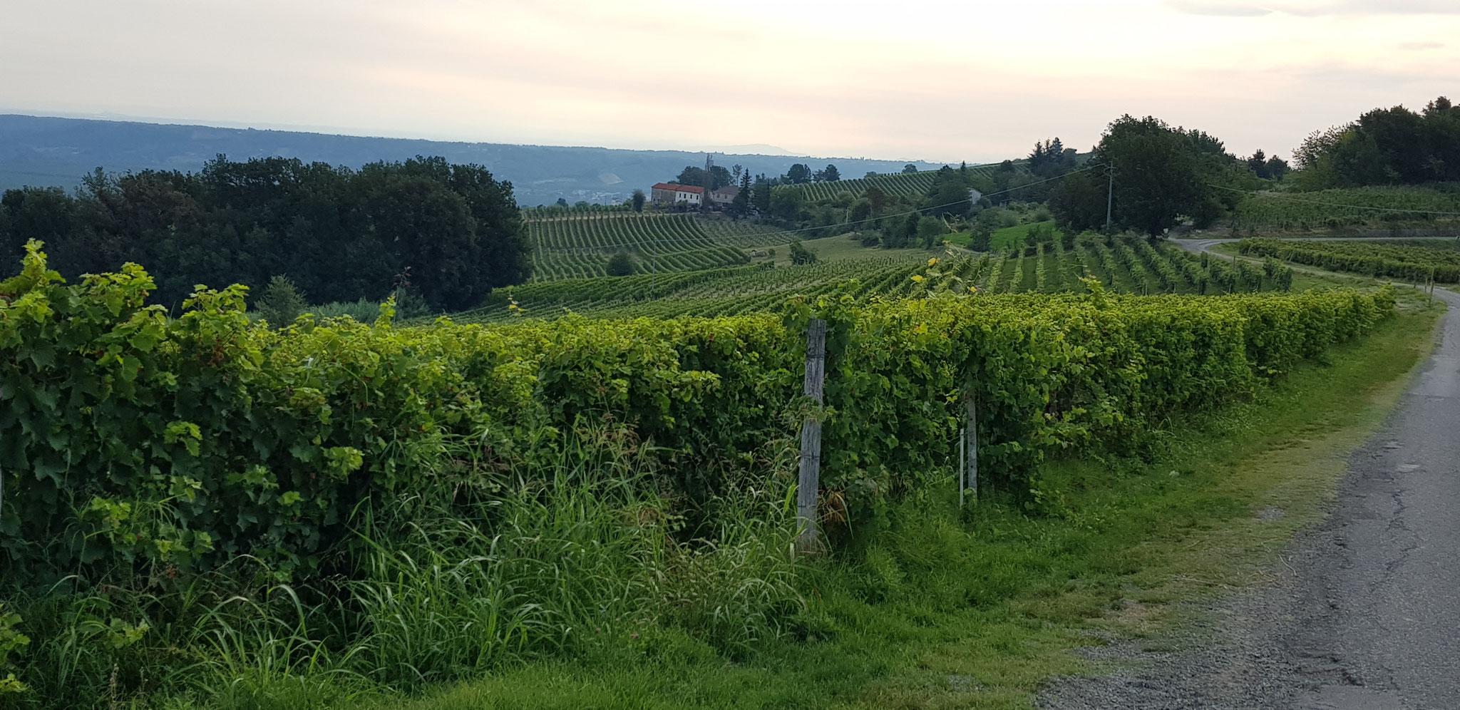 Wanderung über die Hügel von Strevi