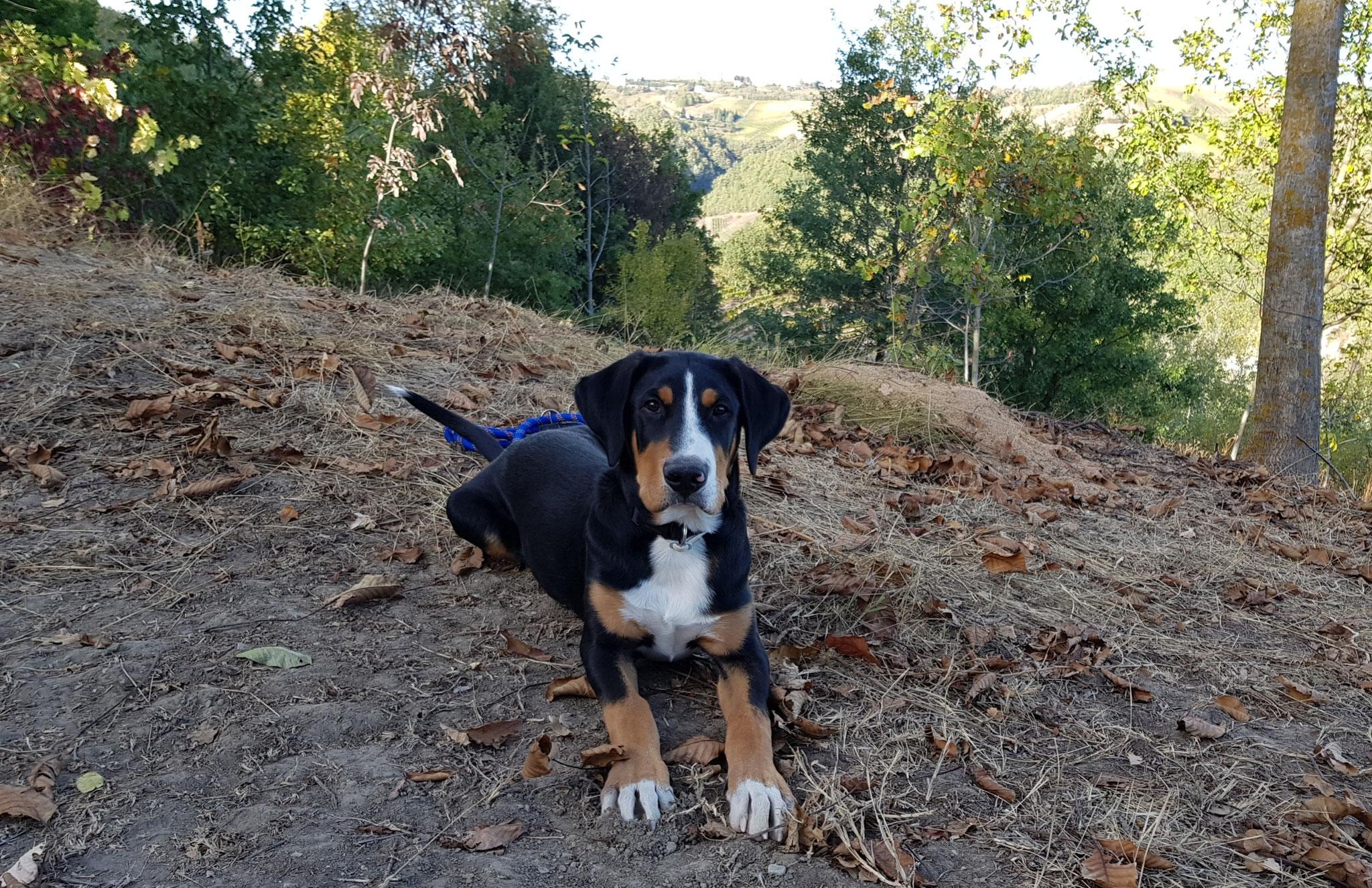 Er darf bei den Streifzügen durch die Hügel auf keinen Fall fehlen. Unser Tirass, 5 Monate alt.