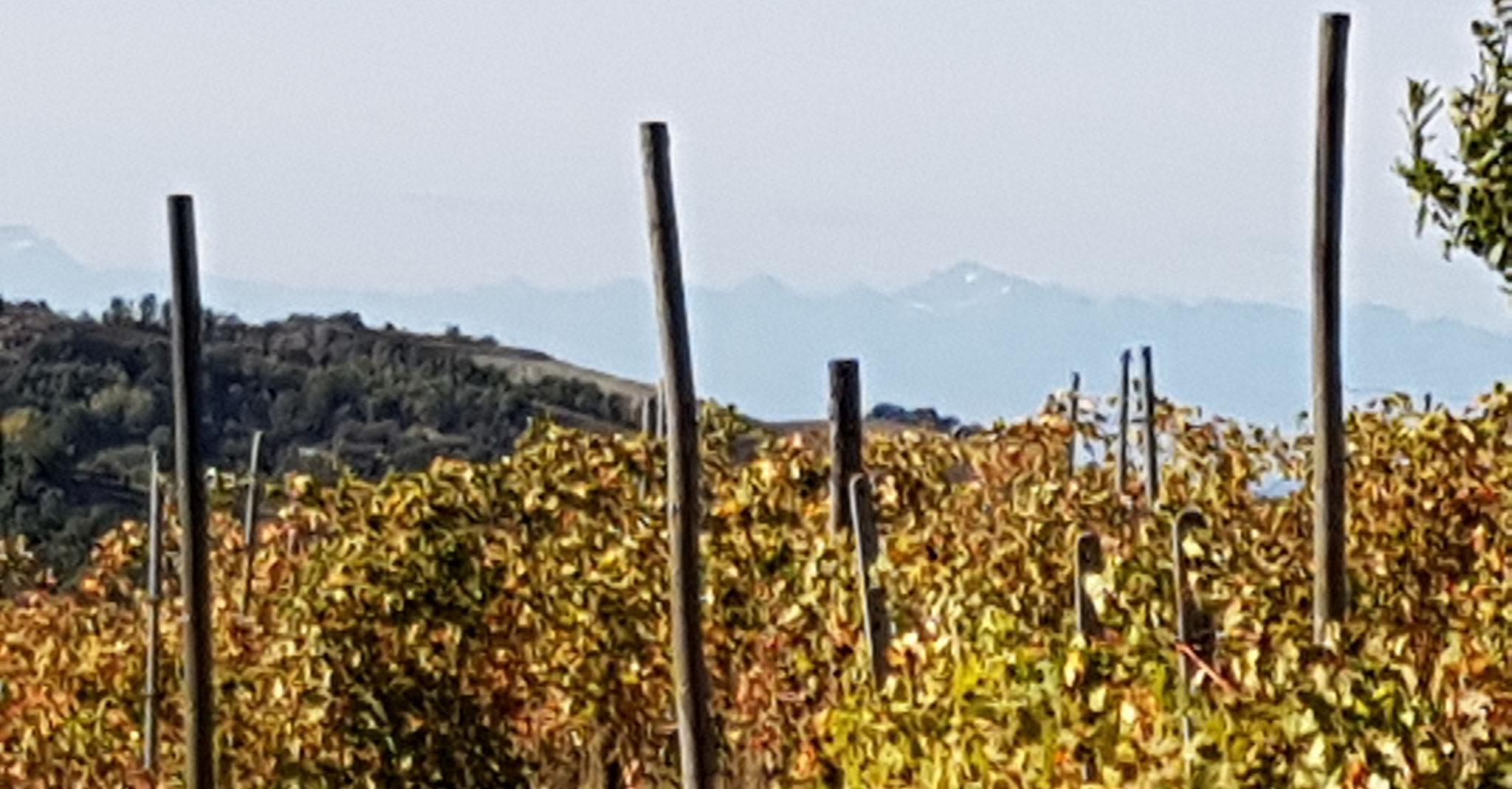 Ein Blick über die Reben in die Berge hinein.