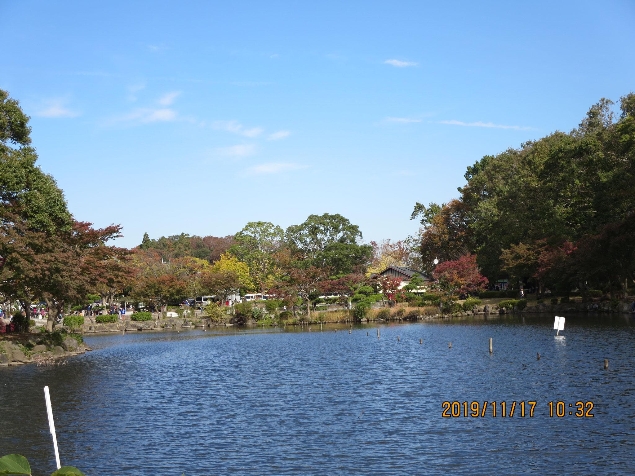 大池の眺め