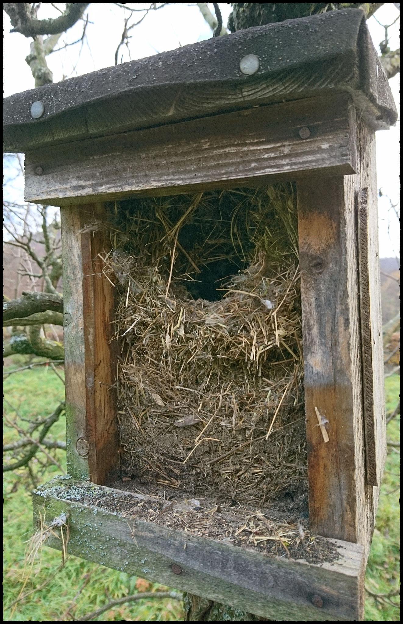 Sperlingsnest im Holzkasten