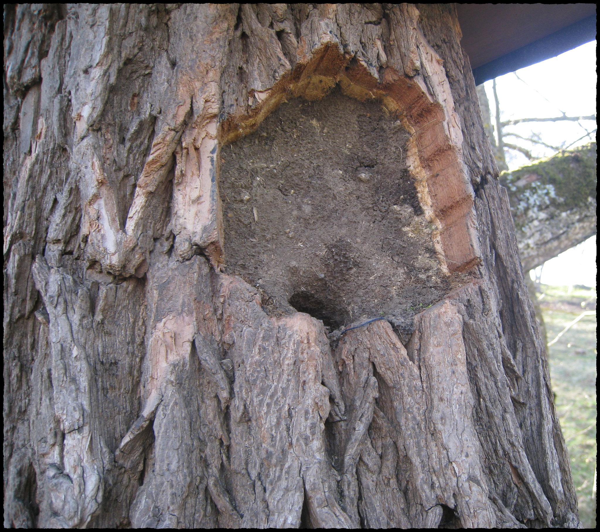 sogar das Einflugloch eines Waldkauzkastens (12cm-Loch) wurde zugekleistert