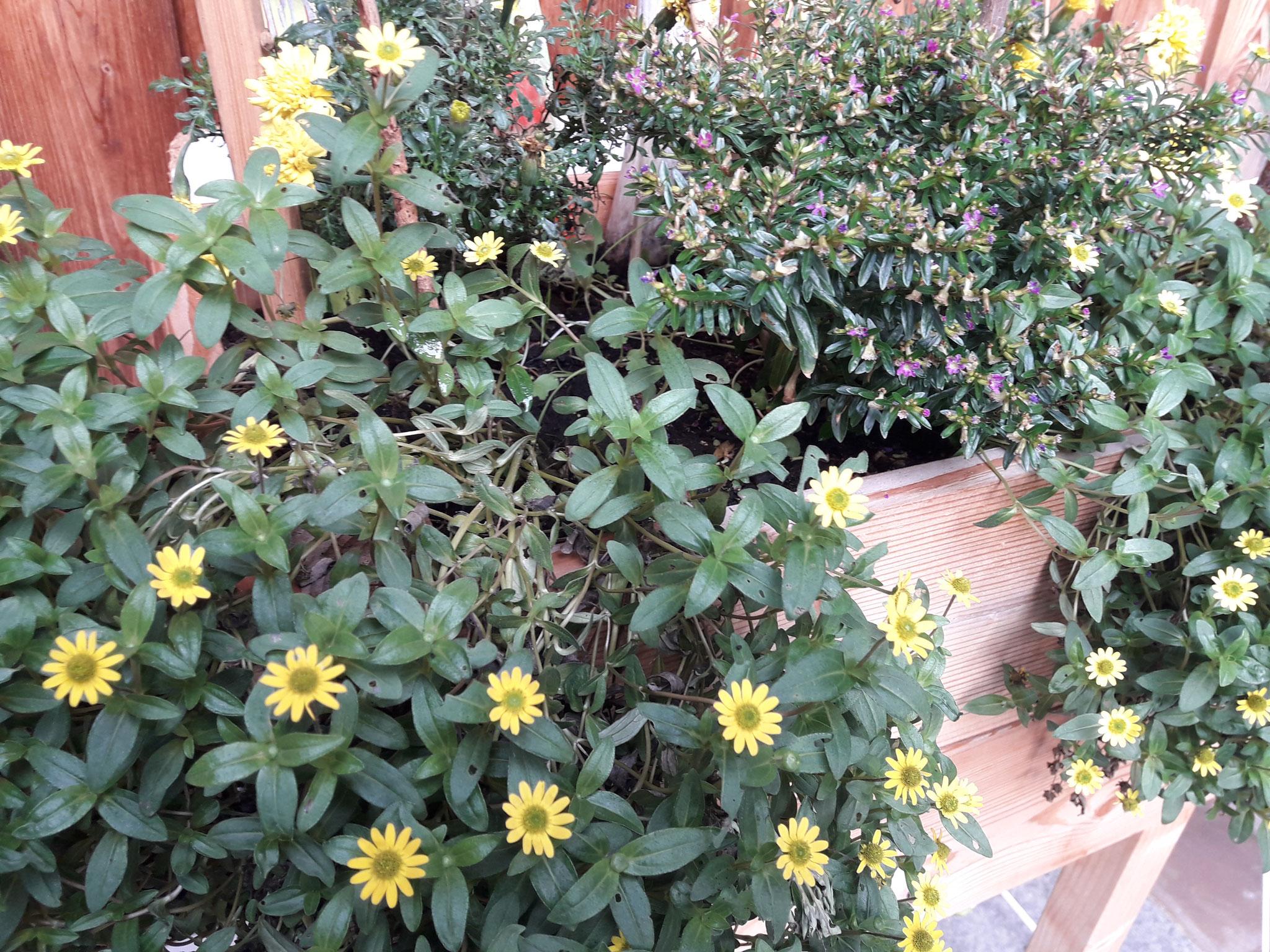 Hochbeet für Balkon und Terrasse