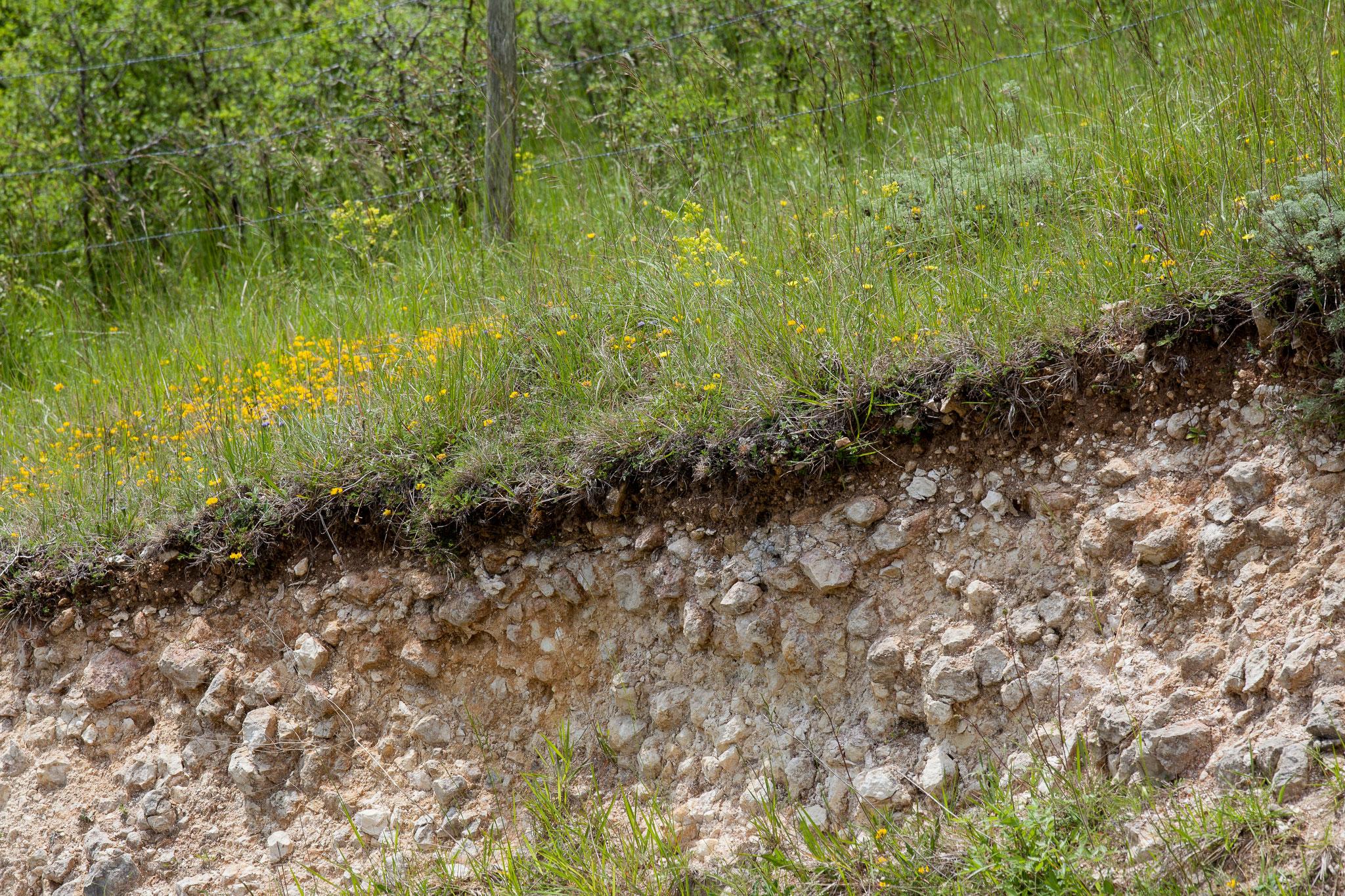 Calcosol limono-graveleux issu de bancs calcaires durs discloqués