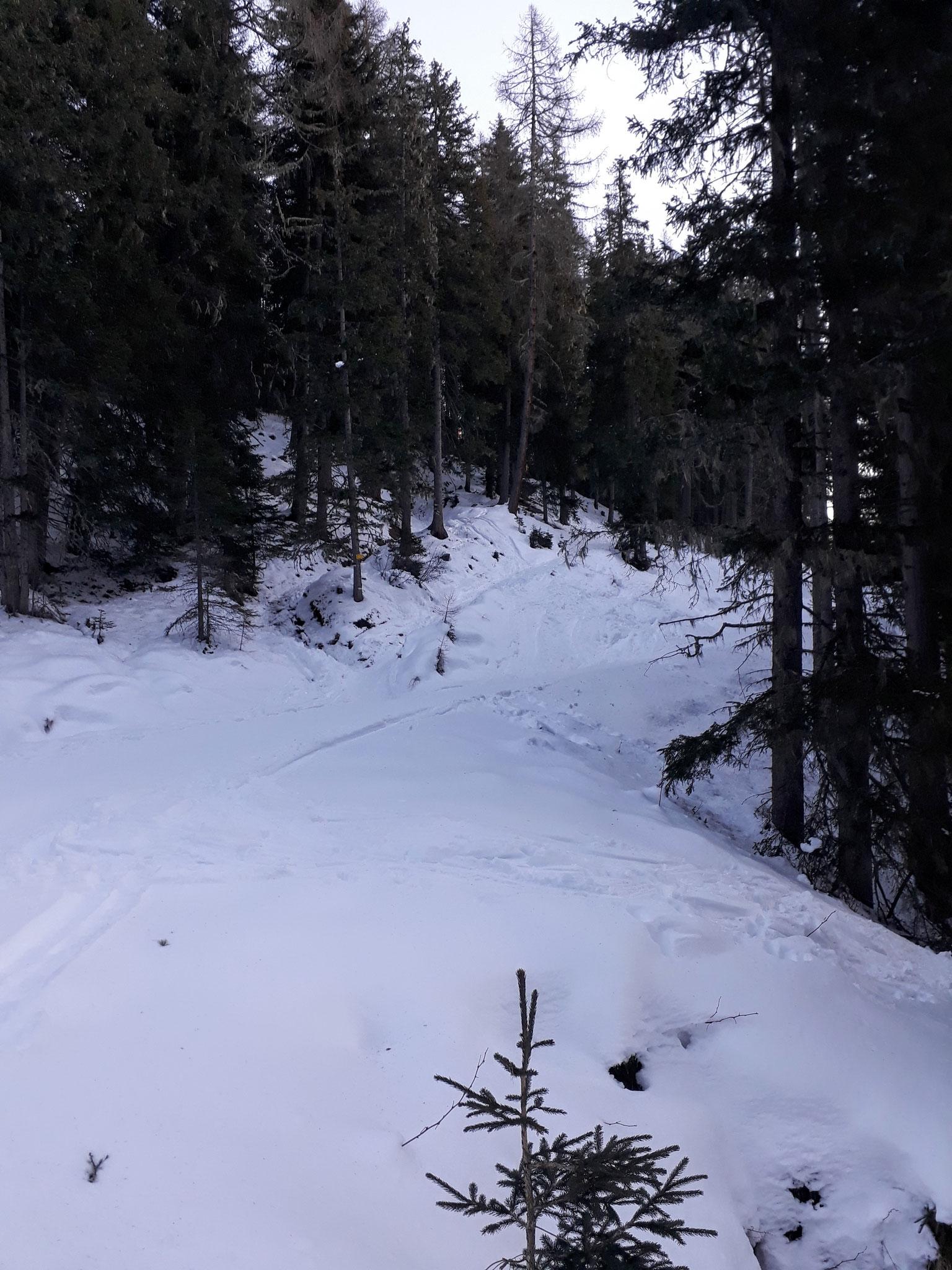 Nach den ersten Metern am Forstweg, wechseln wir in die direkte Aufstiegsspur im Wald.