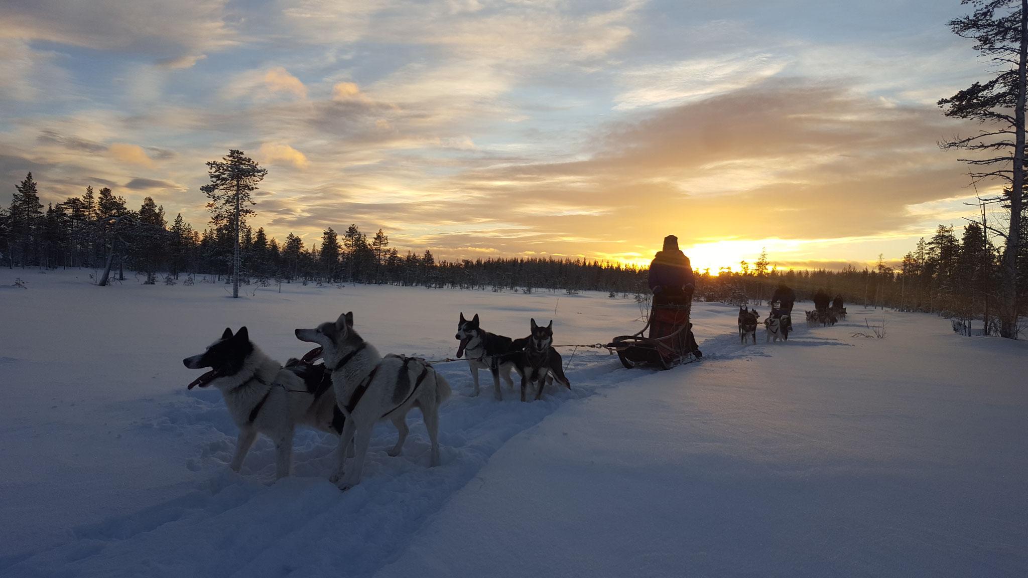 Schlittenhundetouren in Schweden