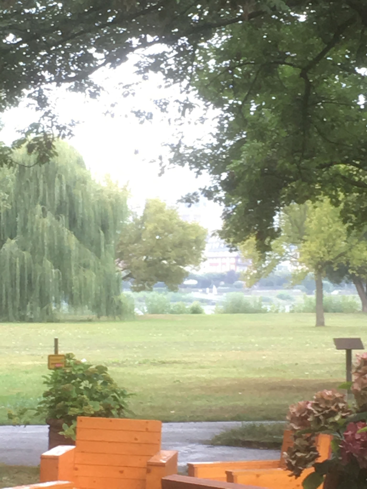 Freie Trauung auf der Maaraue mit Blick auf Mainz