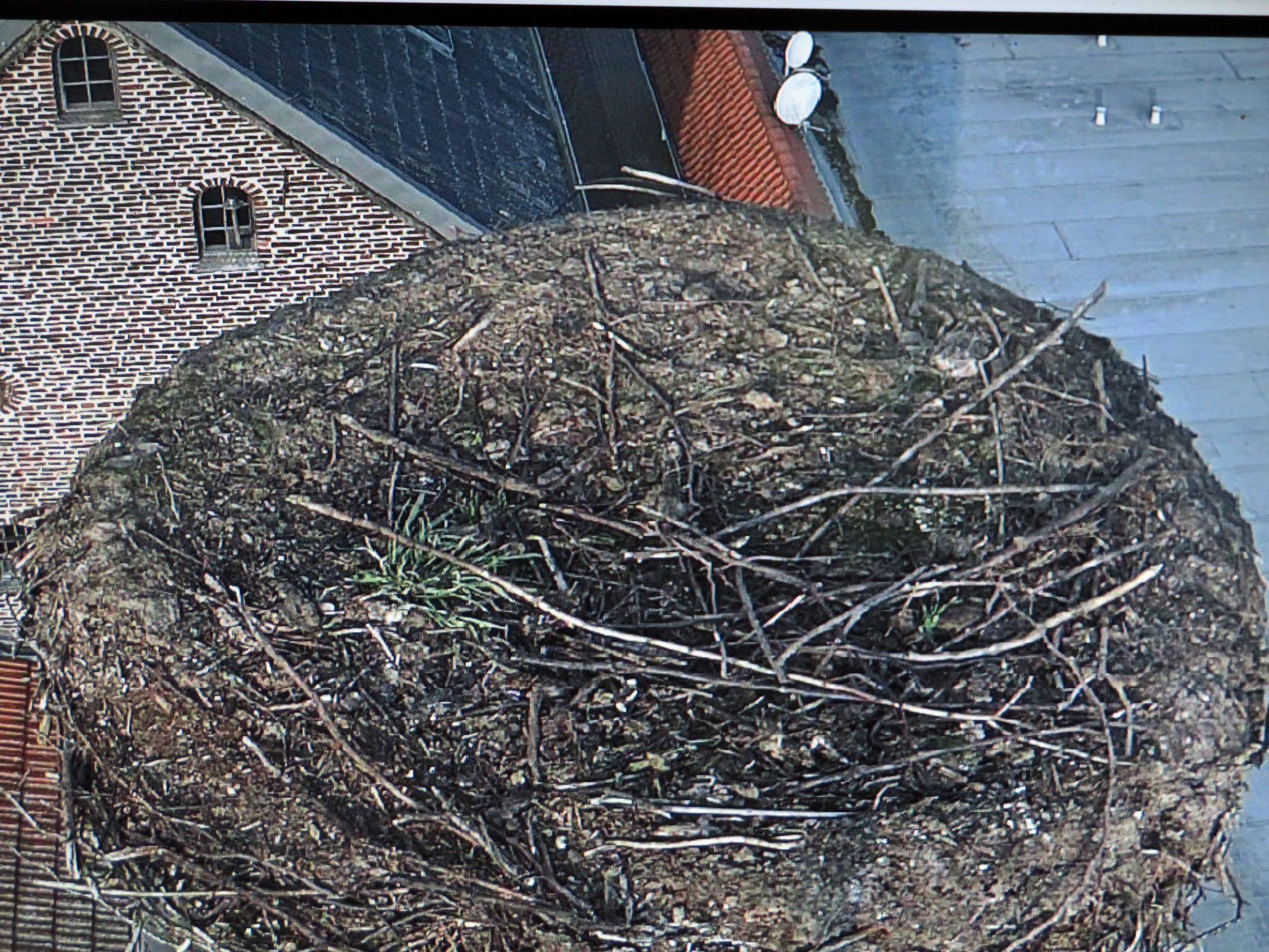 20. Februar - erstes Bild/Nestzustand ist gut