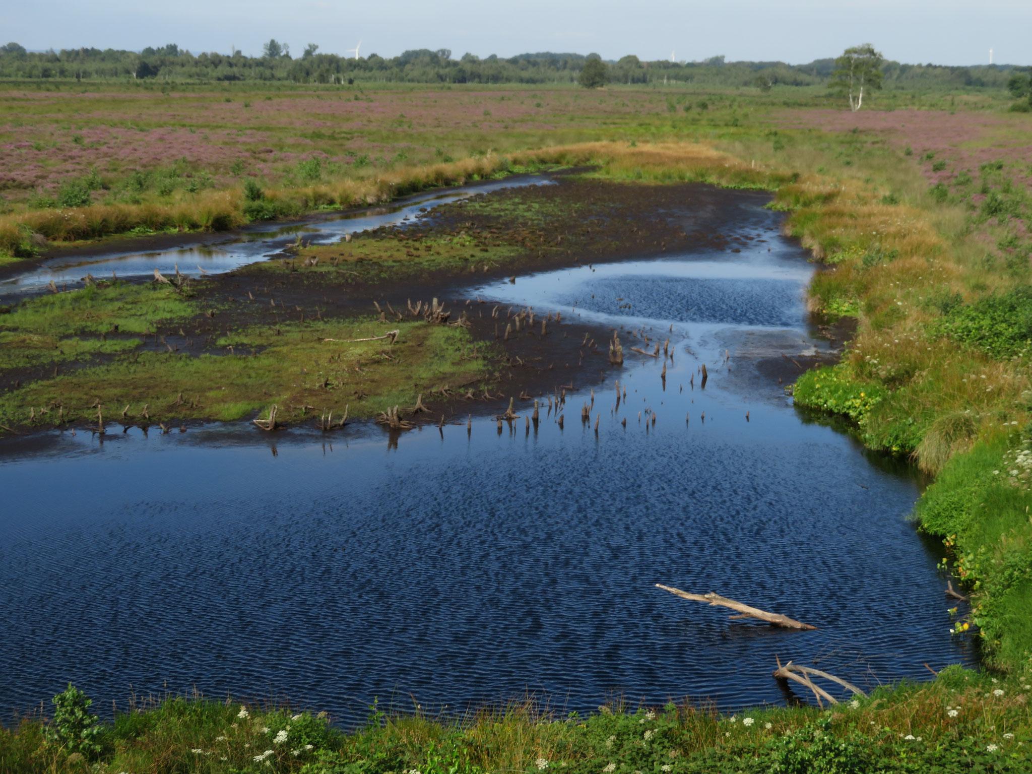 trockenes Moor im August 2019