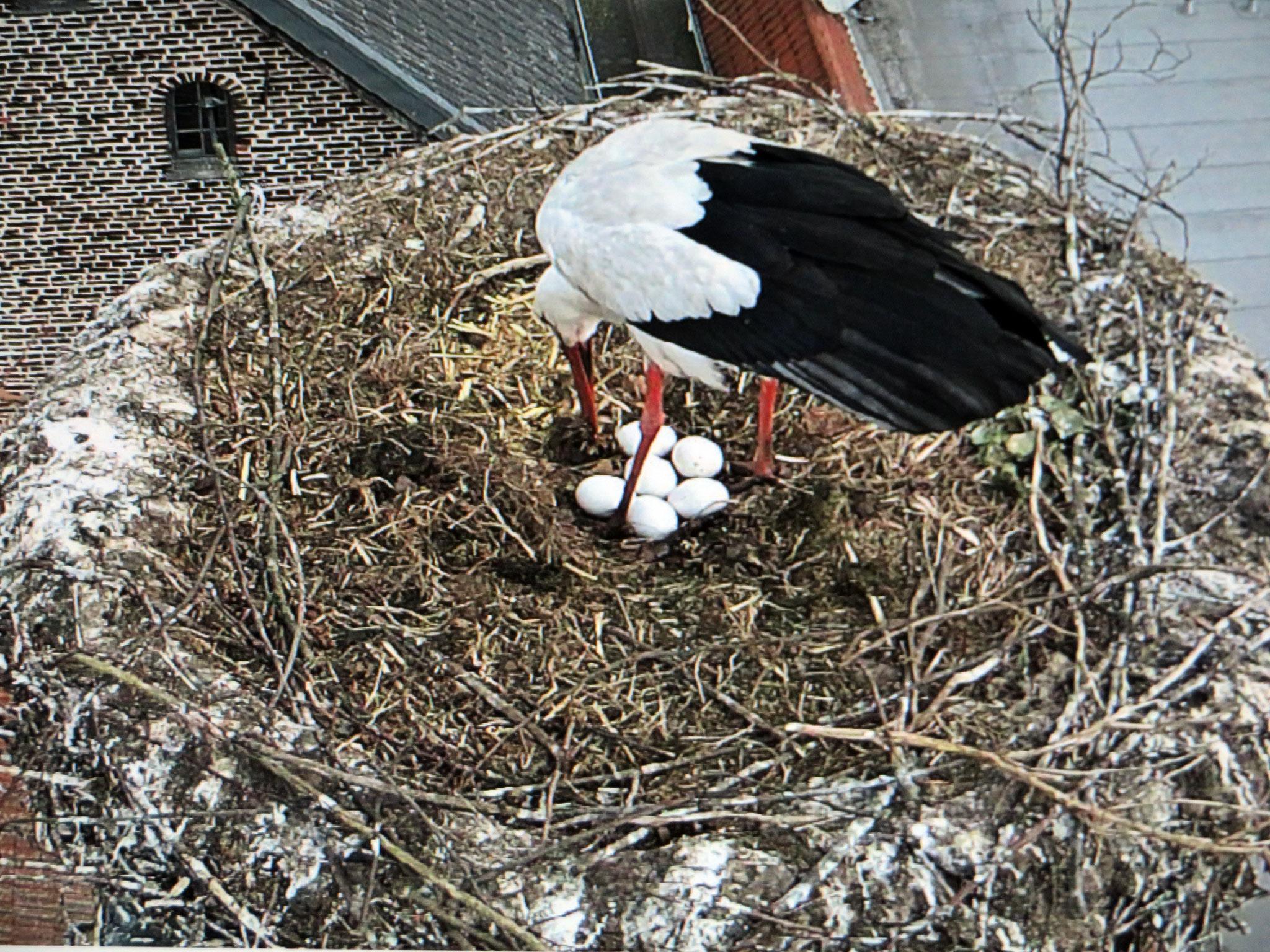 6. April - sechs Eier