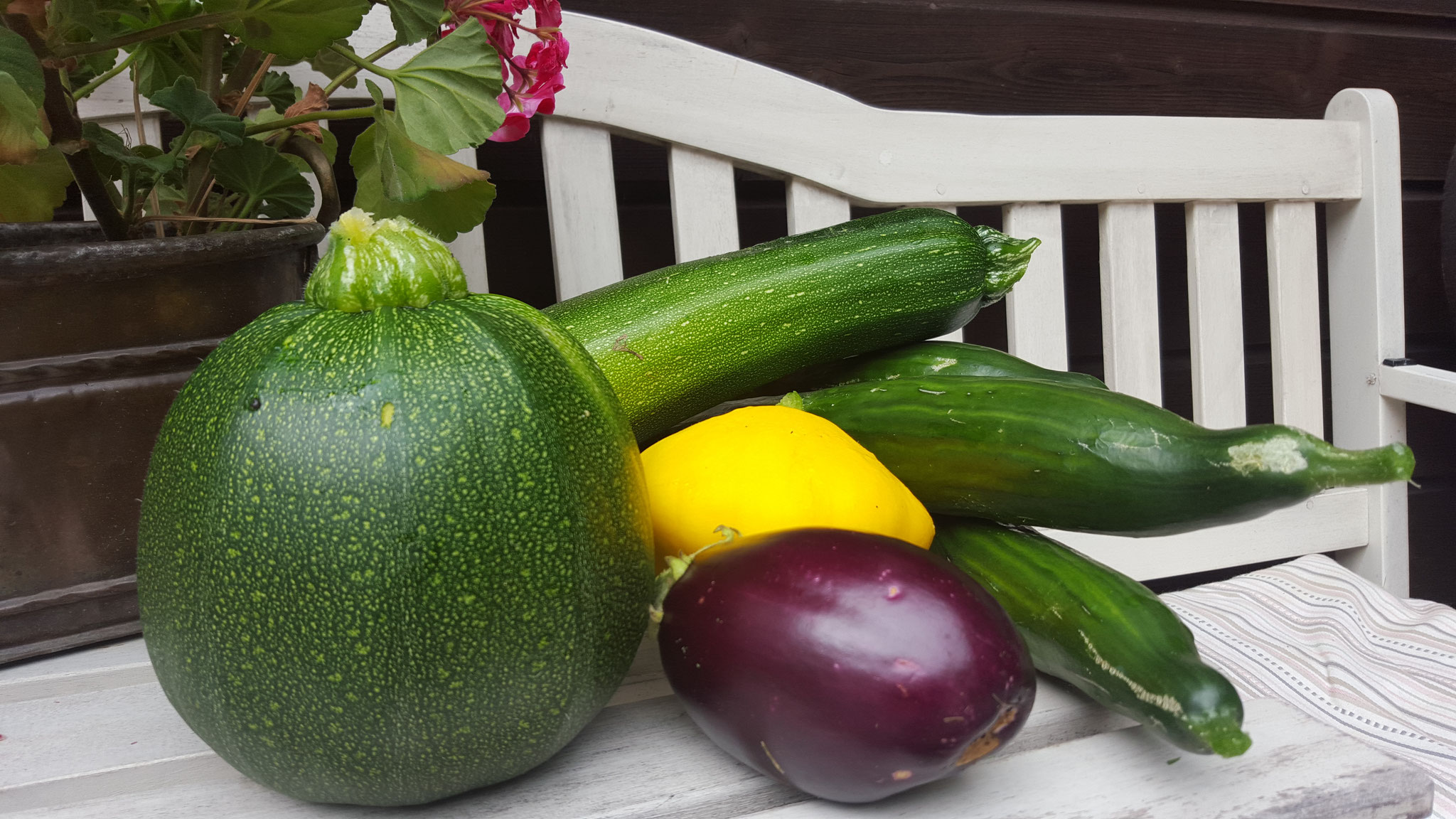 Auberginen, Patisson, Gurken und Zucchini