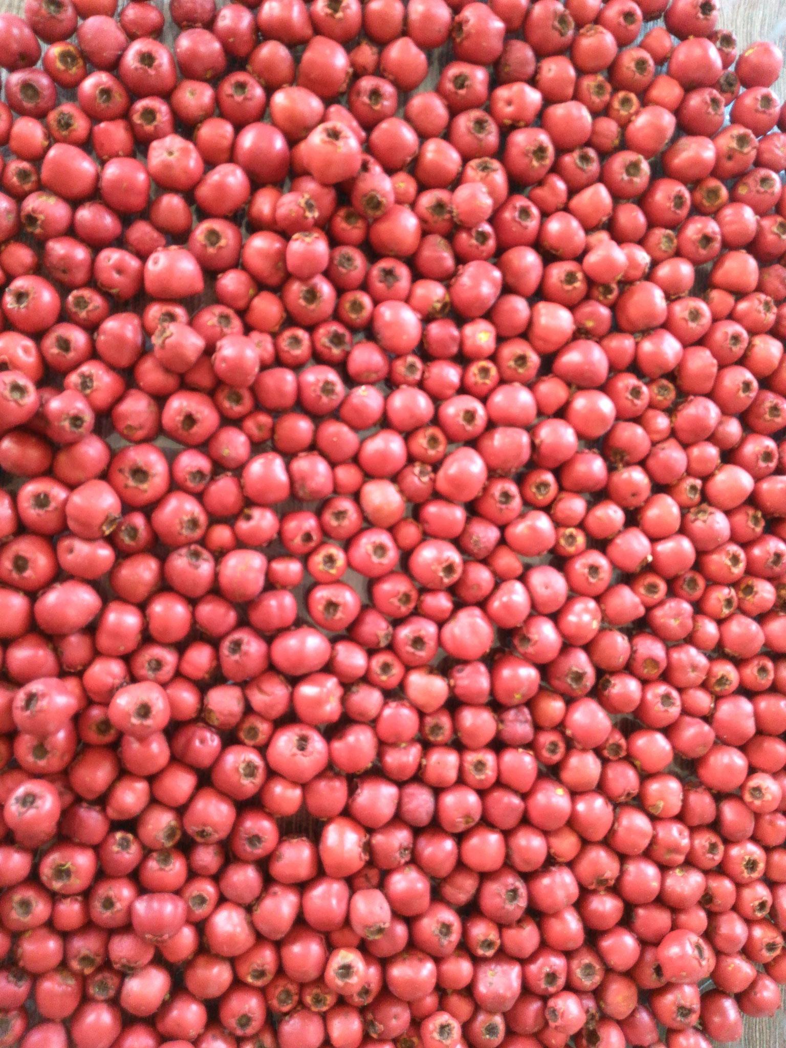 Fruits d'aupépine au séchage