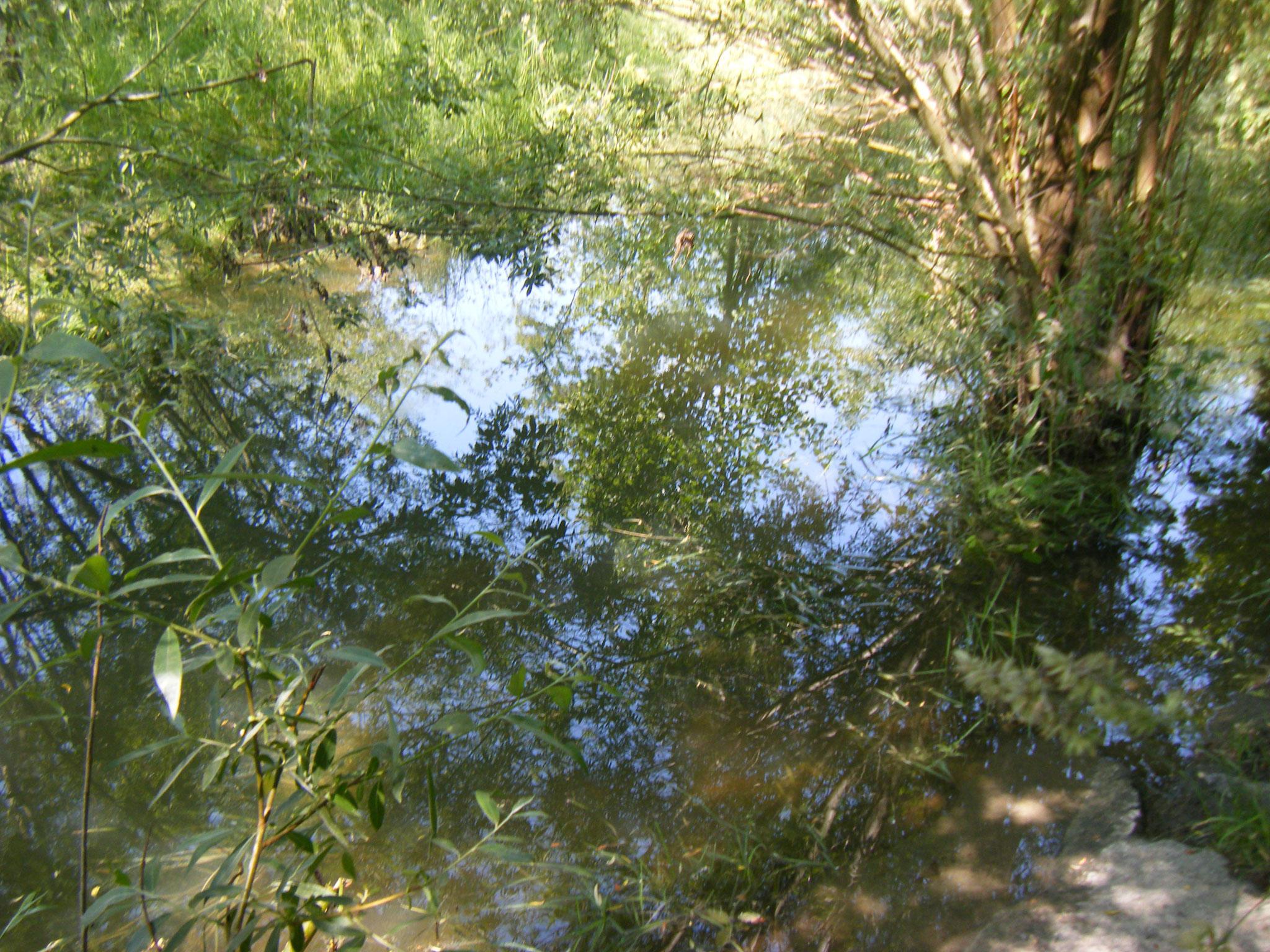 der wiederum hat einen deutlich erhöhtem Wasserspiegel und ist fast 4 m breit