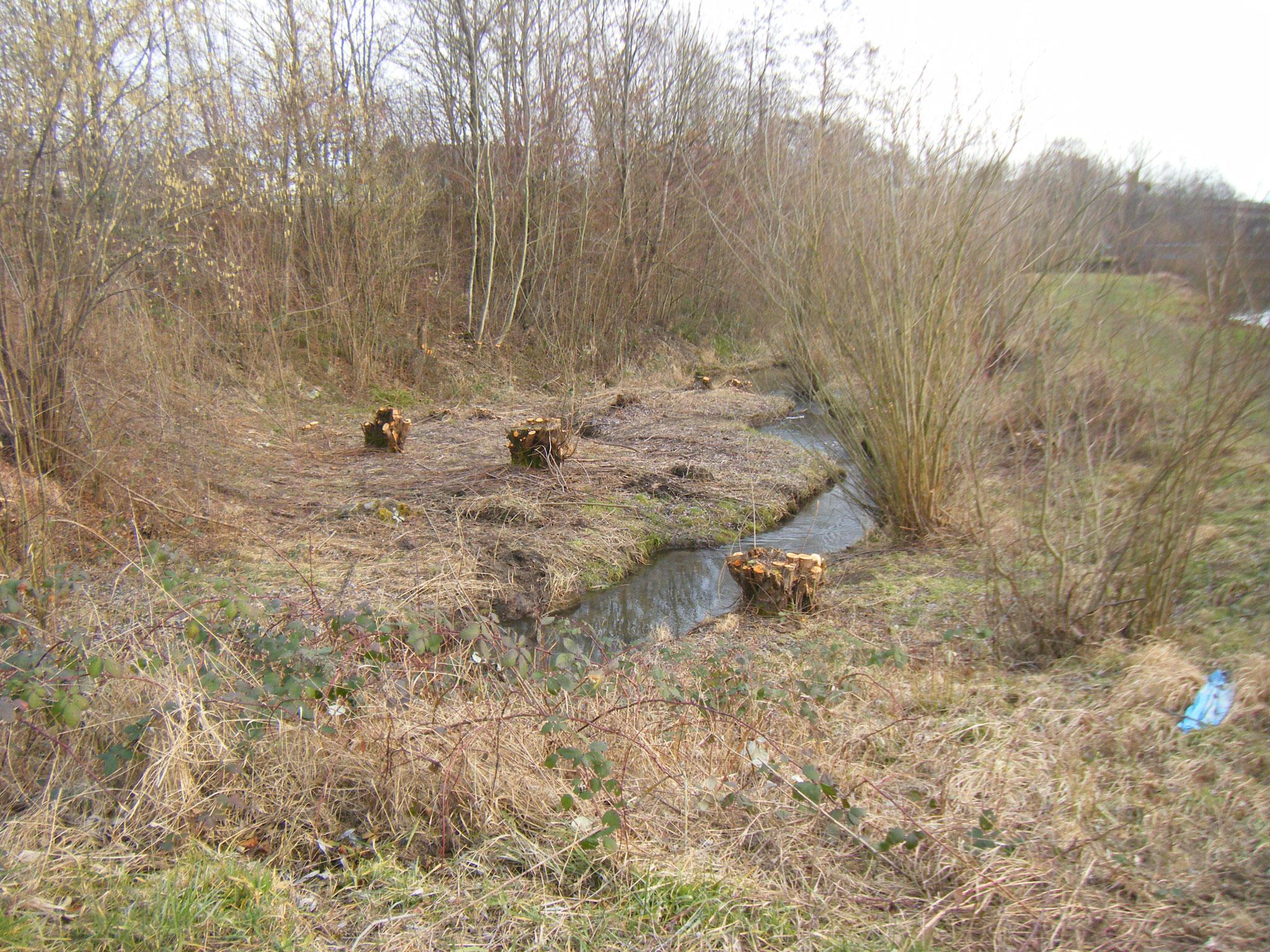 dieselbe Böschung von der Halbinsel aus: komplett kahl. Die Weiden werden jedoch wieder austreiben.