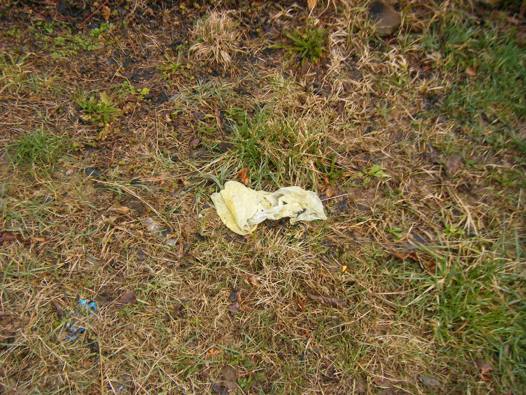 die Reste eines gelben Sackes, der seinen gesamten Inhalt an die Umwelt abgegeben hat