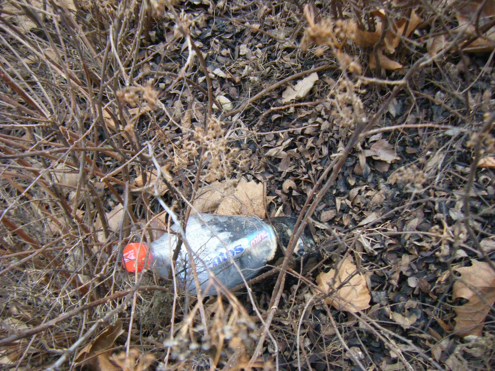 Missglückter Explosionsversuch: eine Rolle Mentos schwimmt in einer halbvollen Flasche Cola