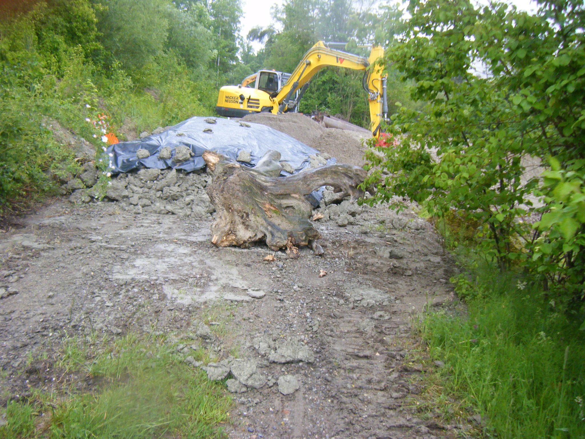 Die Arbeiter haben einen enormen Baumstumpf gefunden und separat gelegt. Könnte auch eine Skulptur sein. Hoffentlich wird er in die endgültige Ufergestaltung integriert.