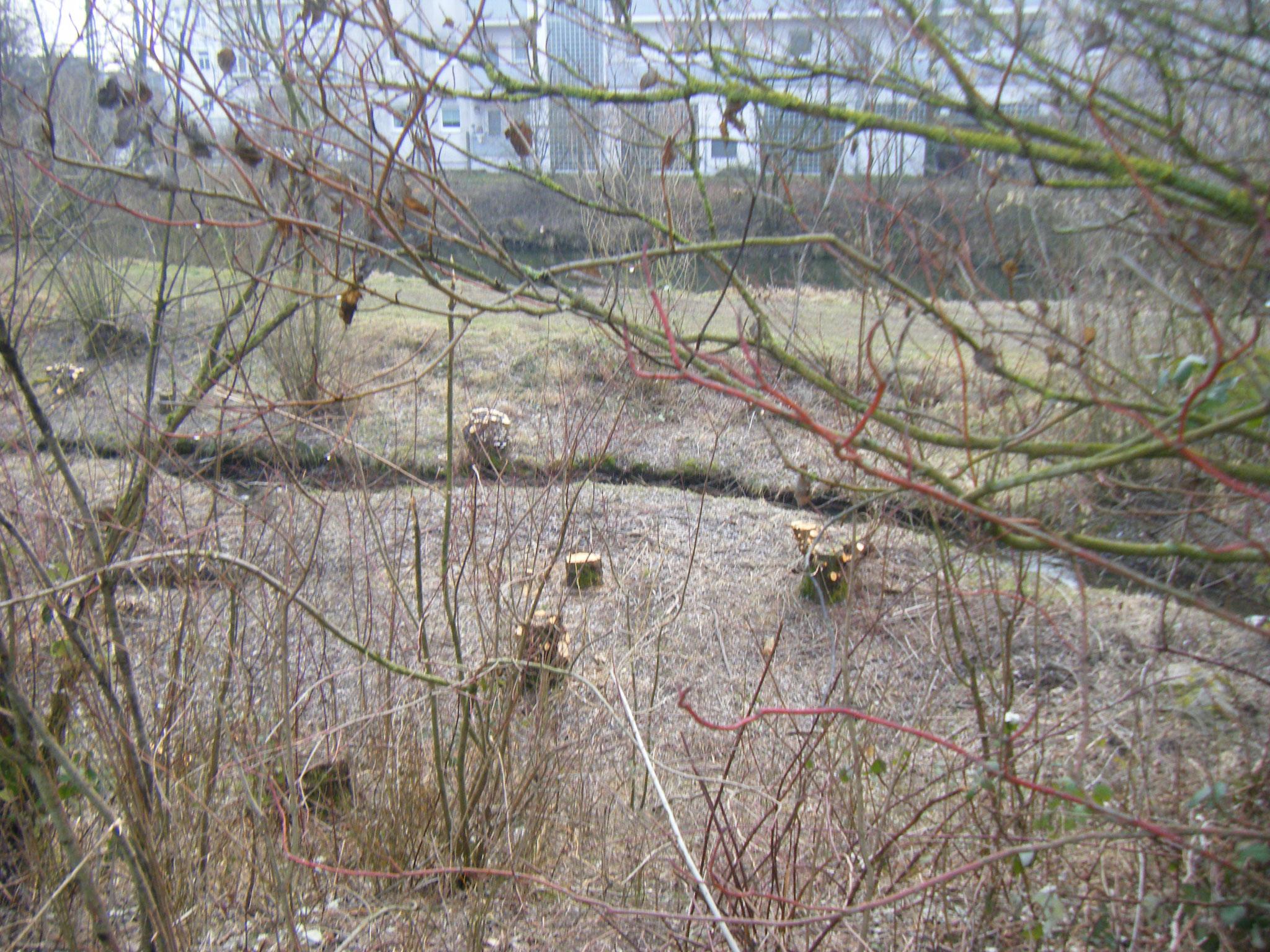 im Umfeld mindestens 30 Büsche und Baume gefällt