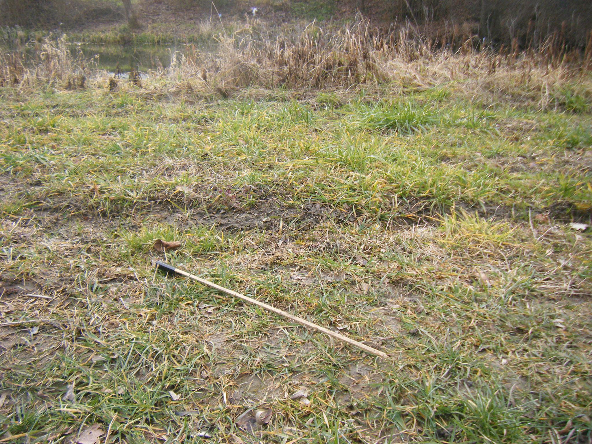 Reste von Silvesterfeuerwerk findet man im Januar flächendeckend überall, sogar tief im Ried und wie hier: auf der Halbinsel des Rundelwehrs