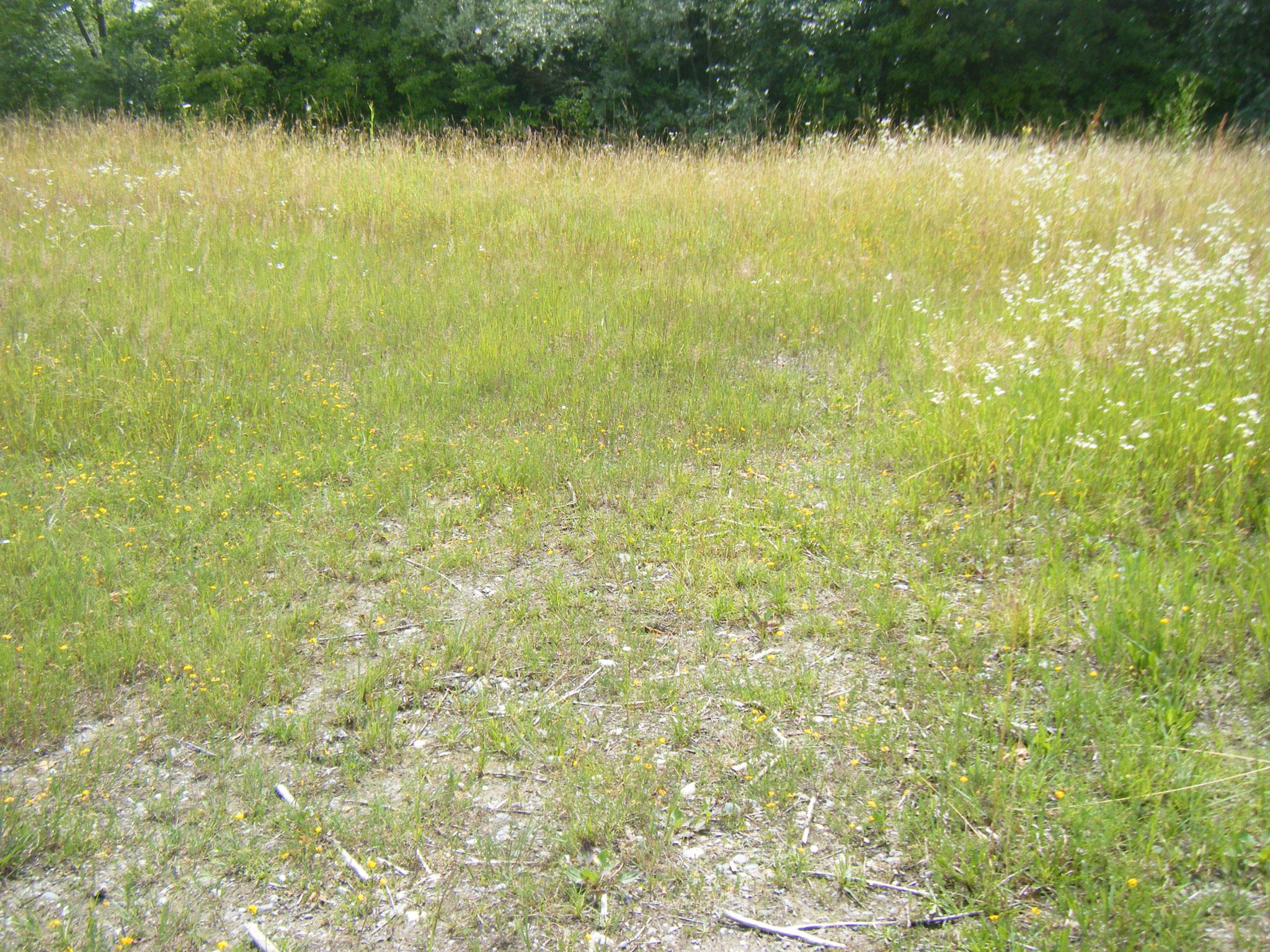 Wenn solche Flächen von schwerem Gerät befahren werden, zeigt sich das noch Jahre später an der kleiner bleibenden Vegetation, durch Verdichtung des Erdreiches