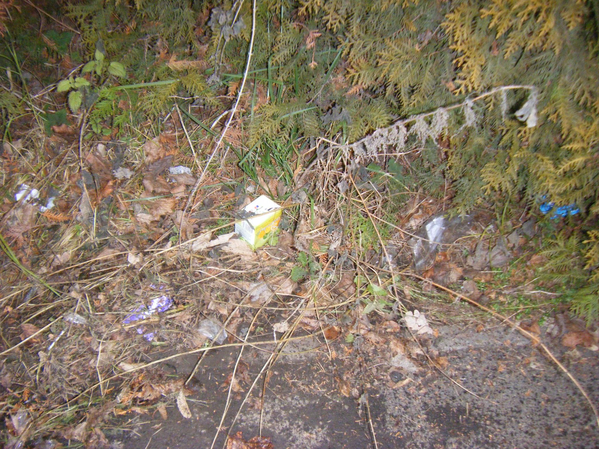 Suchbild: vieviel Müll befindet sich in diesem Unterwuchs neben der Bushaltestelle?