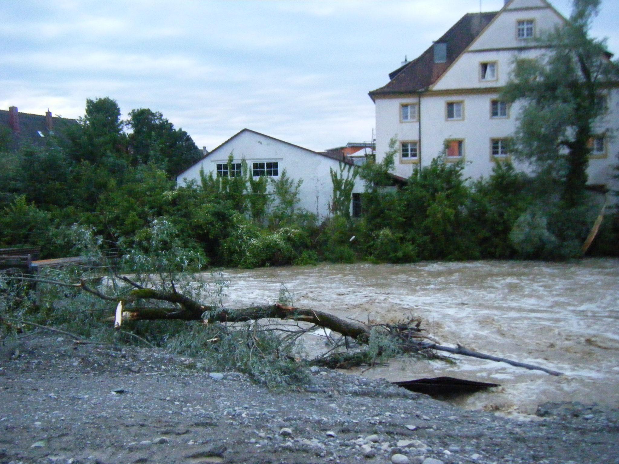 Gegenüber rechts sieht man einen abgerissenen Weidenstamm, vermutlich der Baum, der im Vordergund liegt