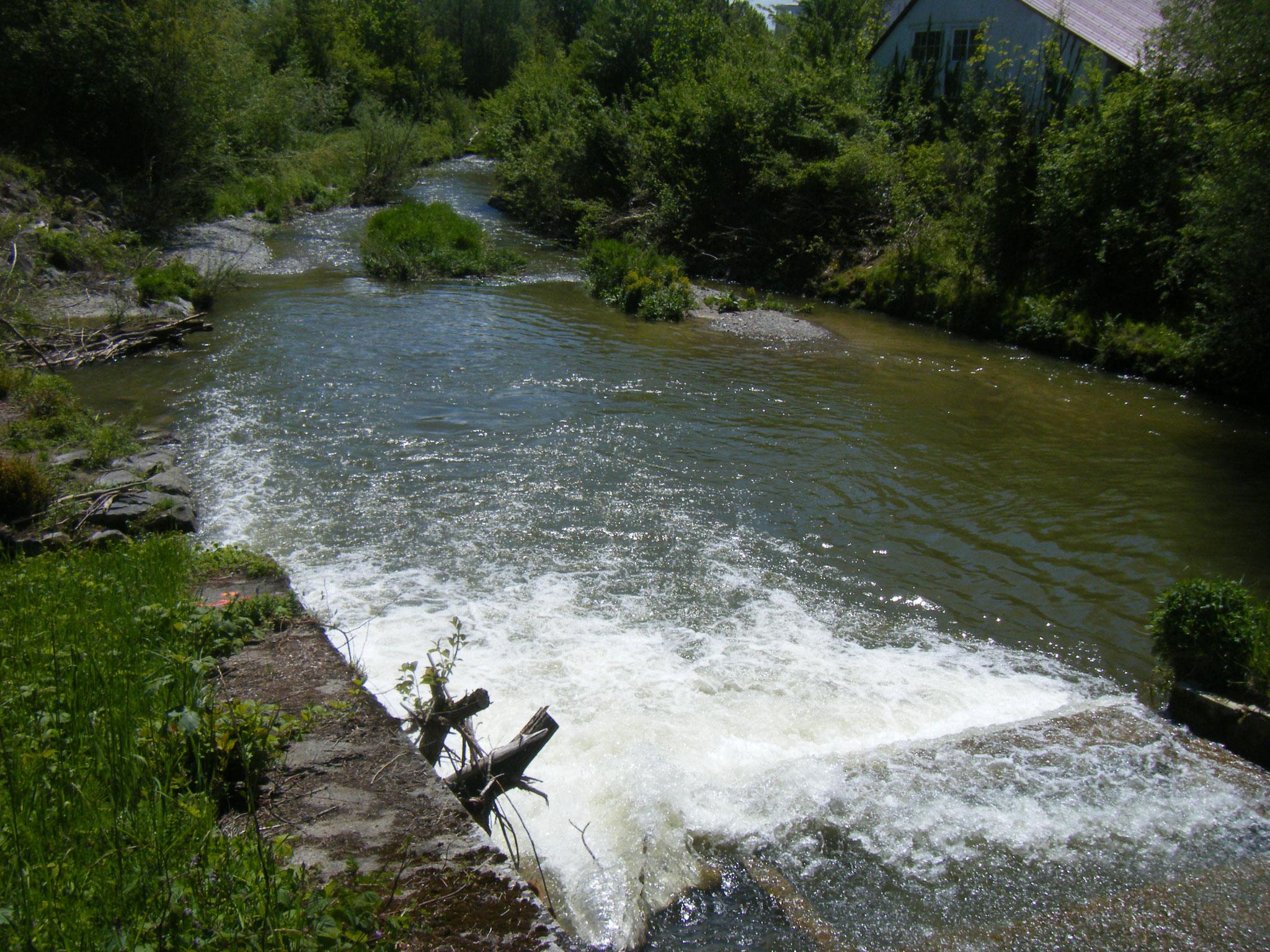 Flussabwärts des Rundelwehres ist die Rotach für ein kurzes Stück relativ breit, hat Kiesinseln und ist beschattet. So sollte der gesamte Flusslauf aussehen.